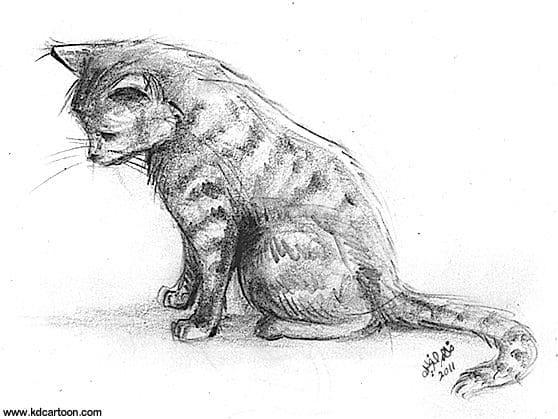 Immagini Di Gatti Per Disegnare E Copiare Piu Di 100 Fotografie