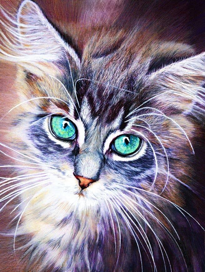 růžové kočička foto