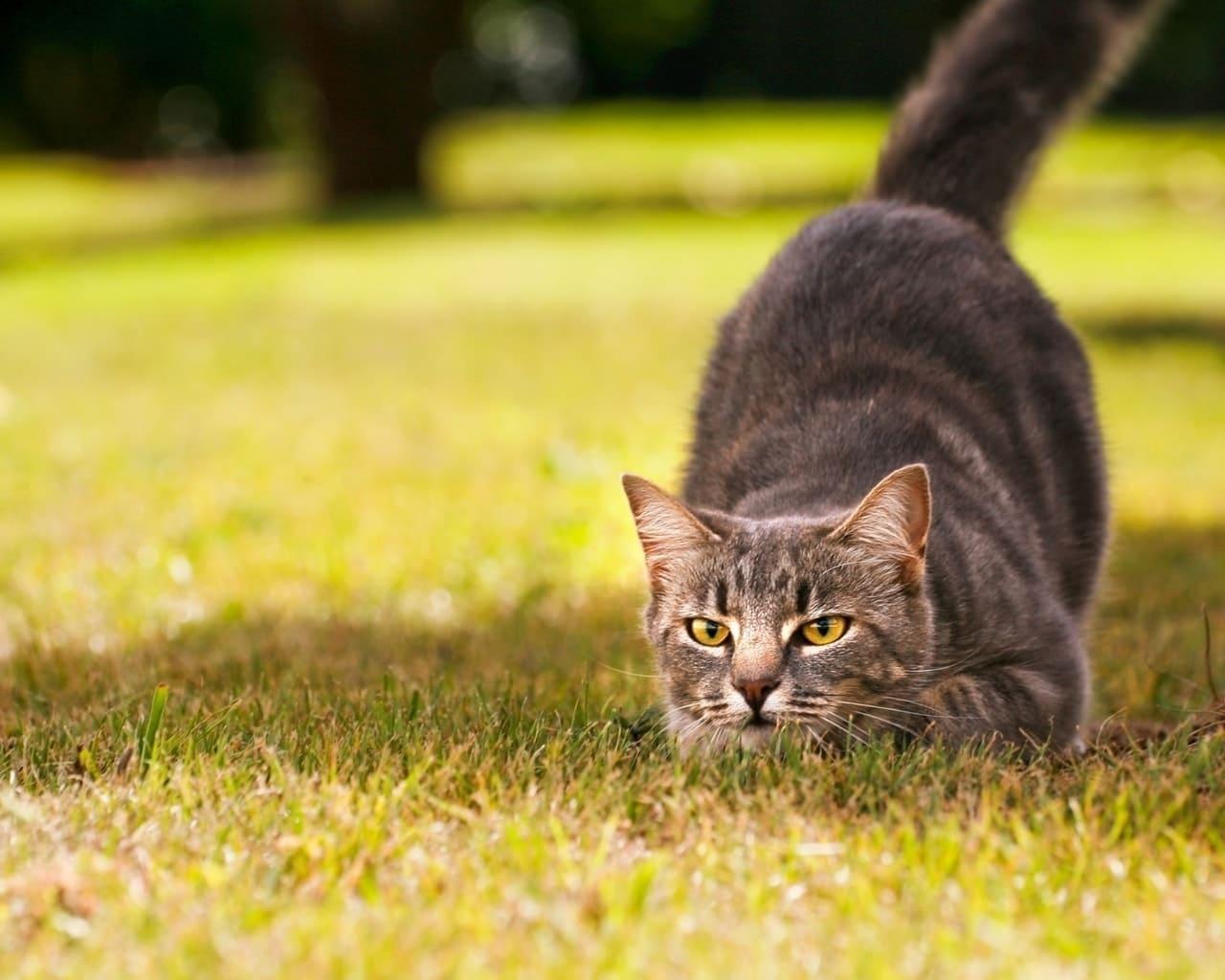 černé dívky kočička tumblr