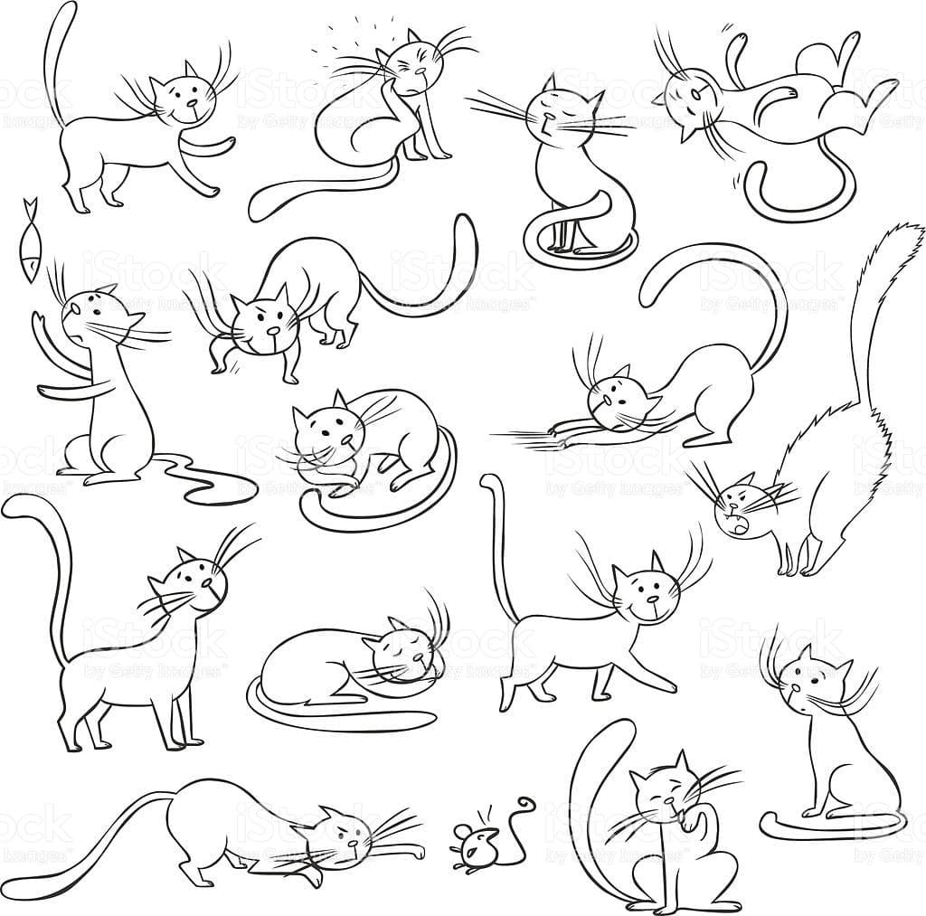 Bilder von Katzen zum Skizzieren. Mehr als 100 Bilder!