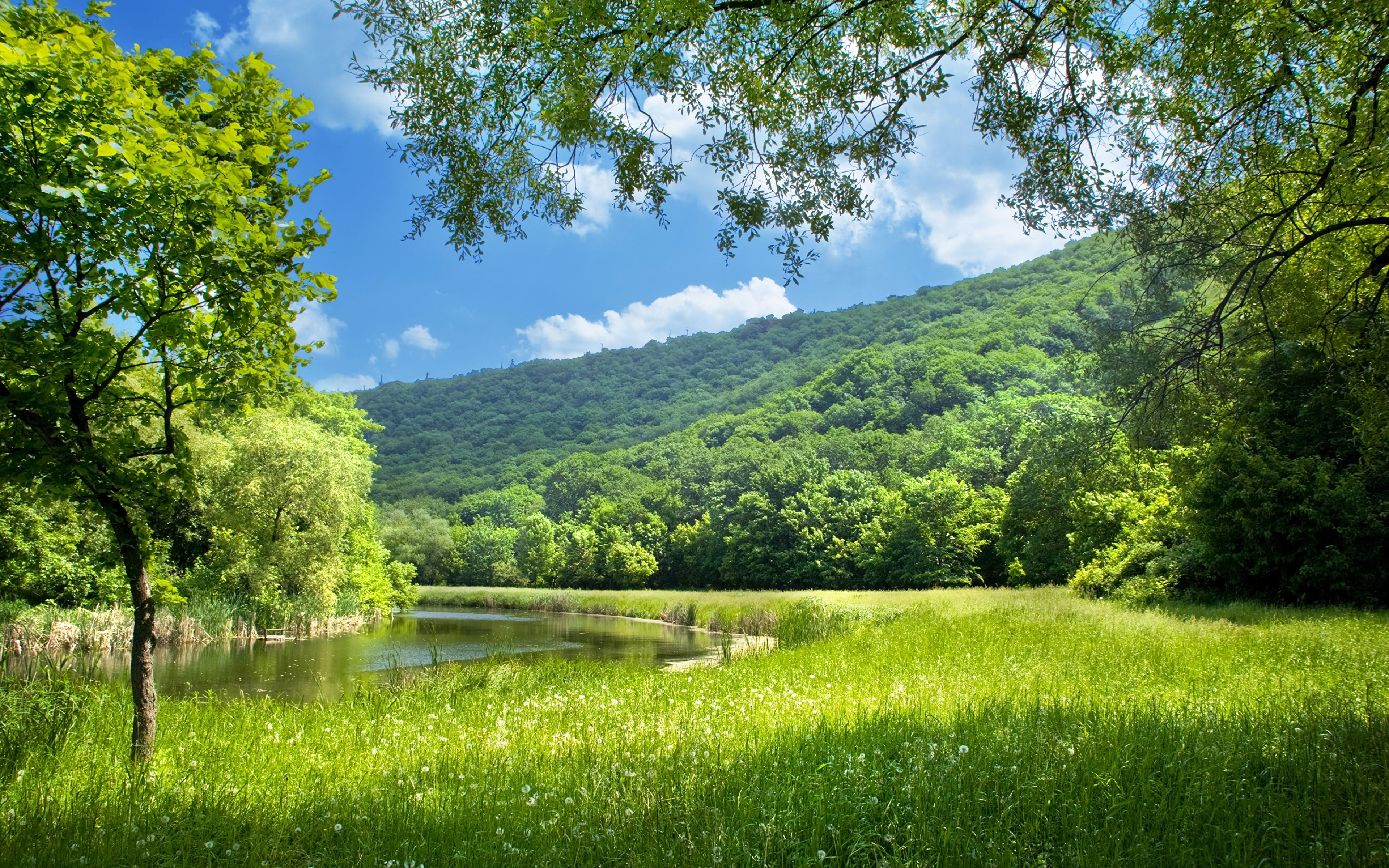 картинки прекрасное лето высыхания составляет
