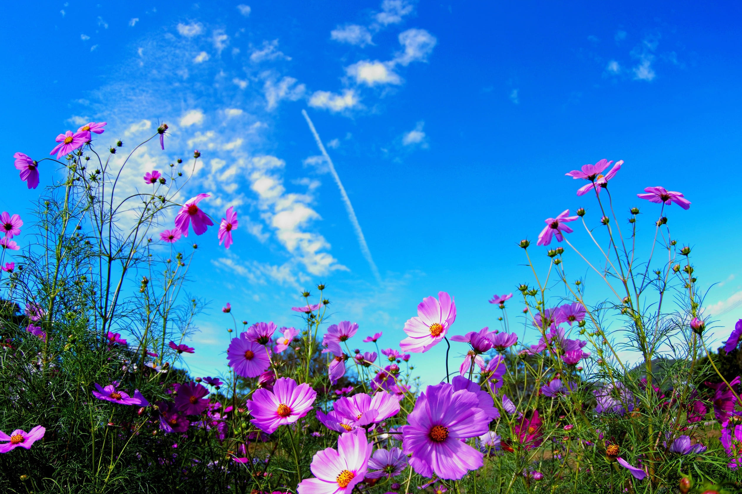 Images of Beautiful Summer Nature. 100 Photos for Your Desktop