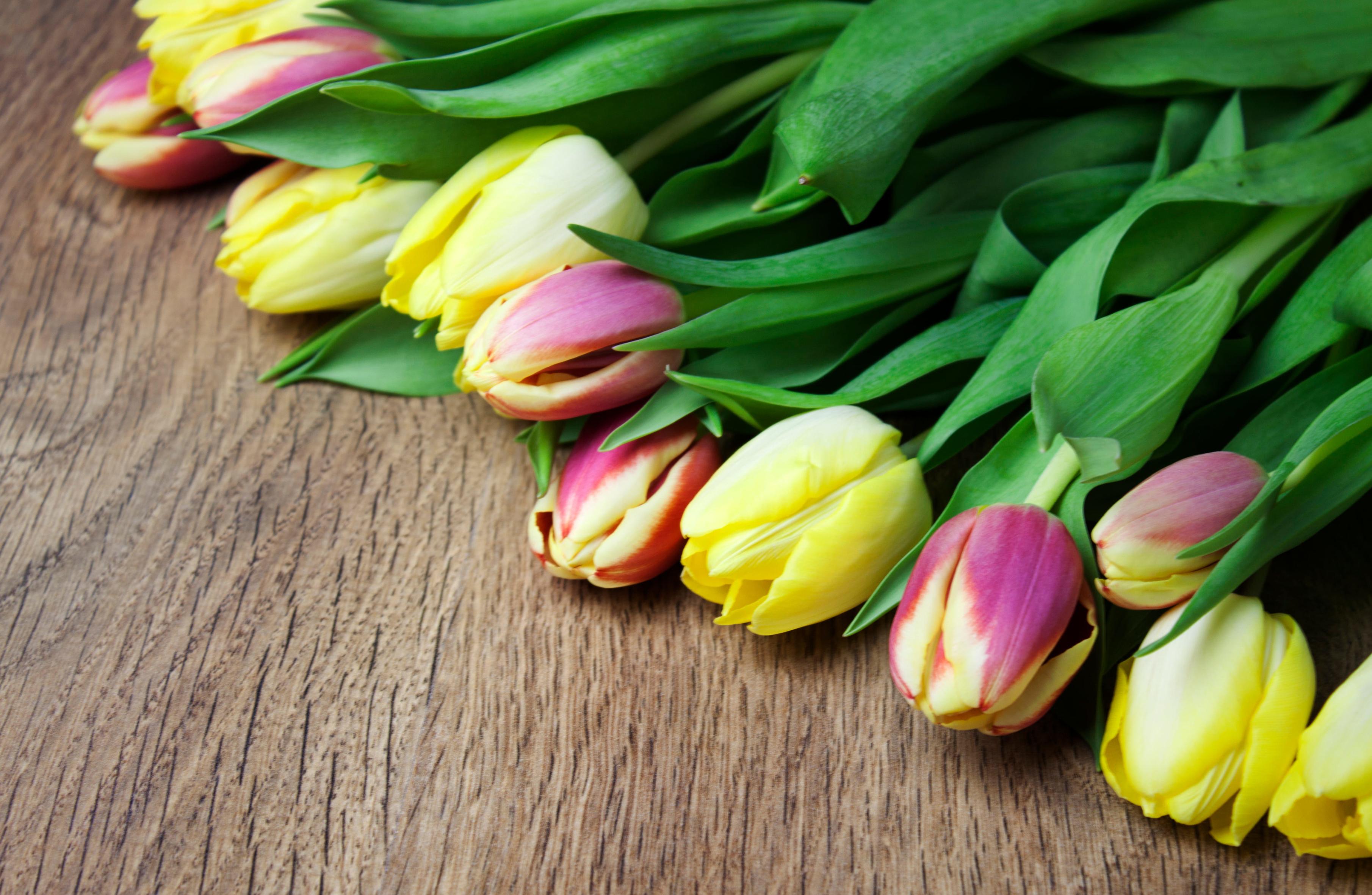 tulip-photo-10