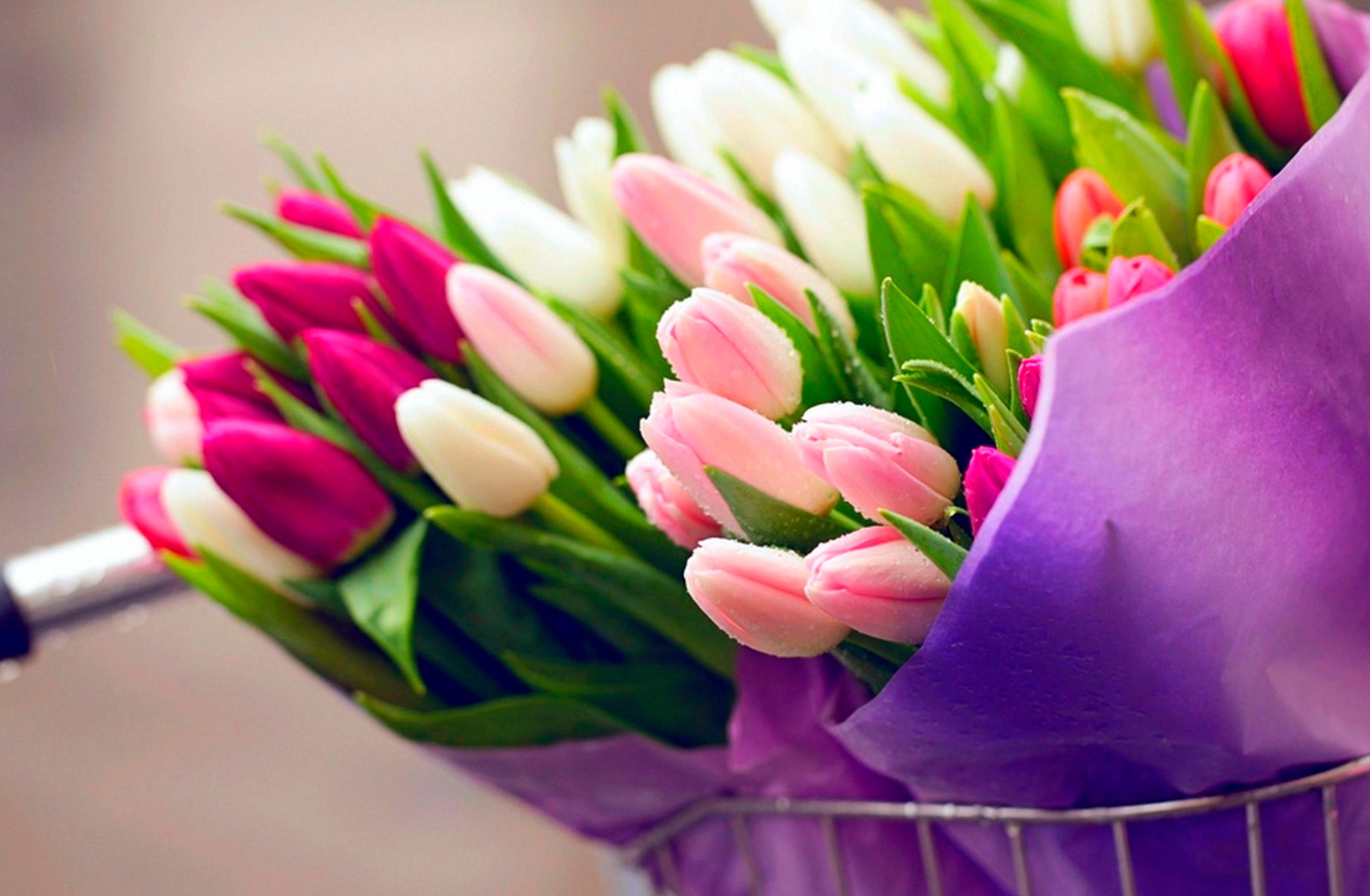 tulip-photo-101