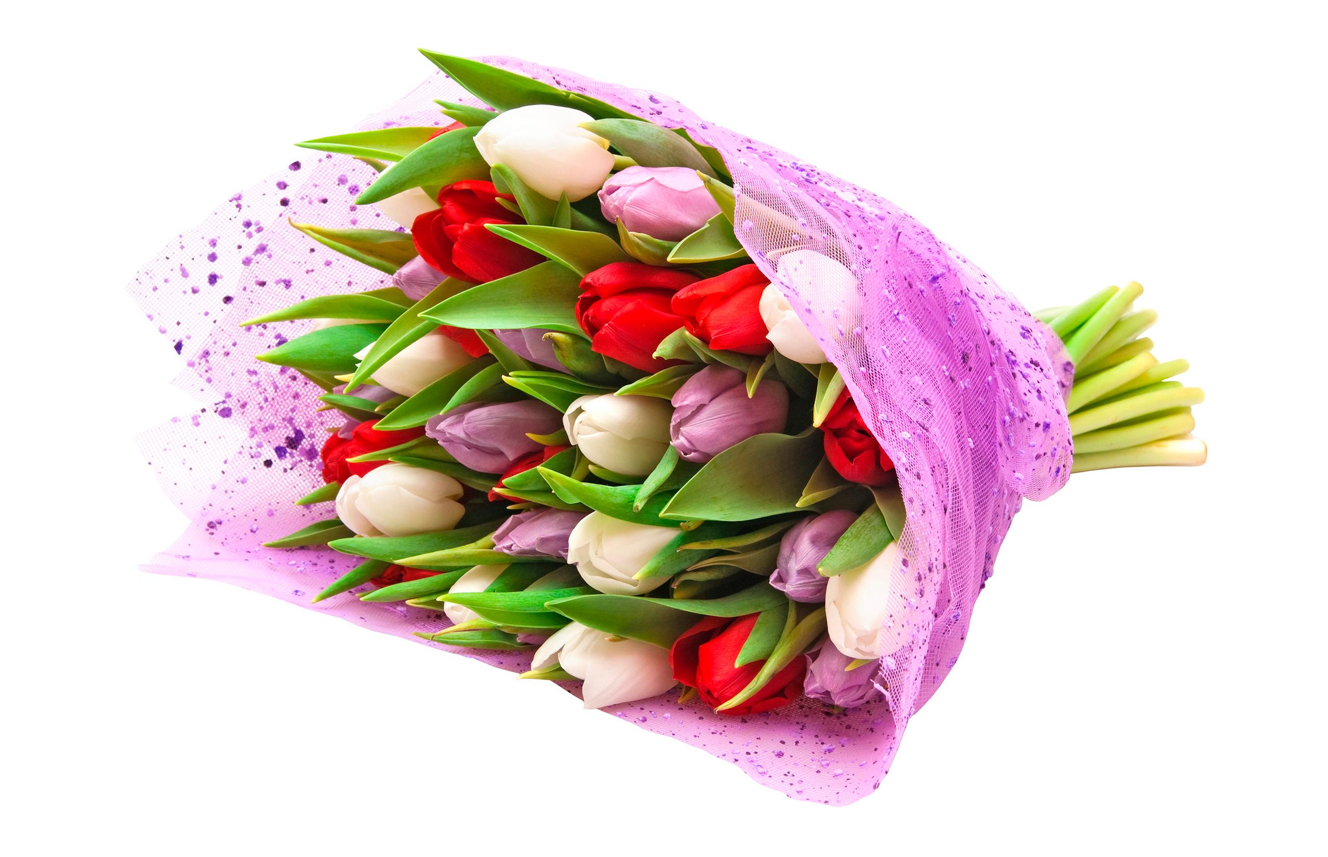 tulip-photo-107