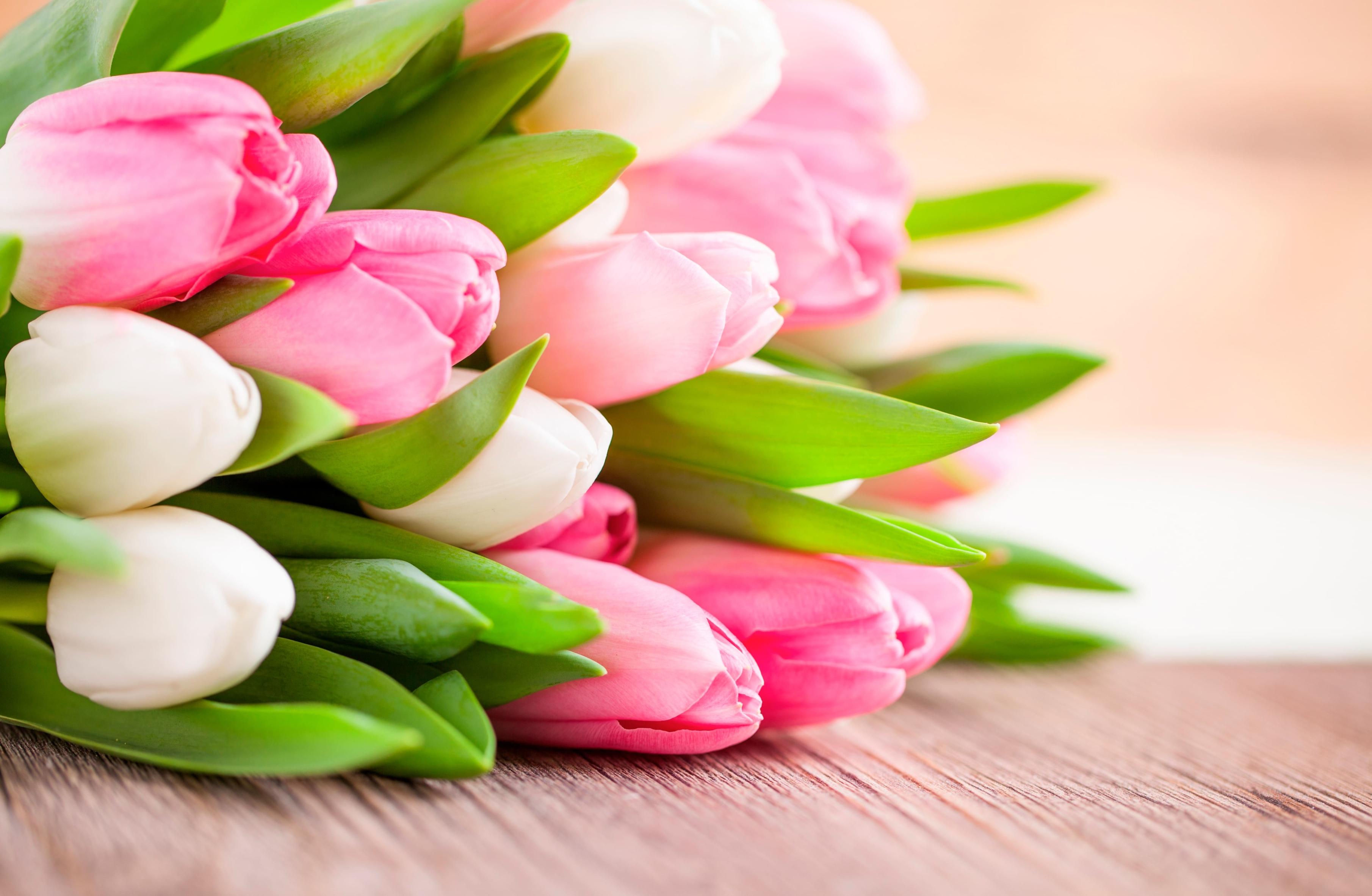 tulip-photo-11