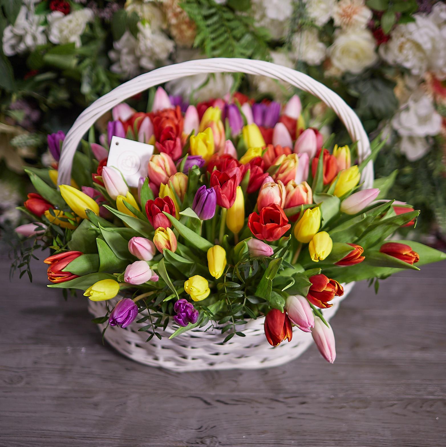 tulip-photo-134