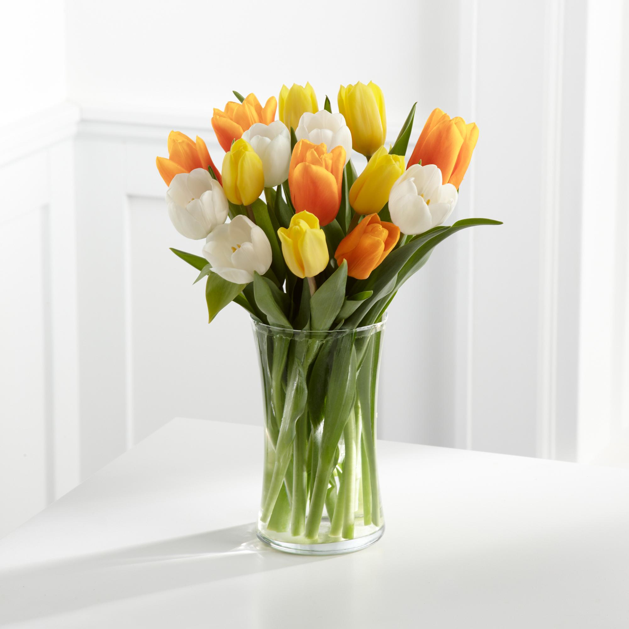tulip-photo-135