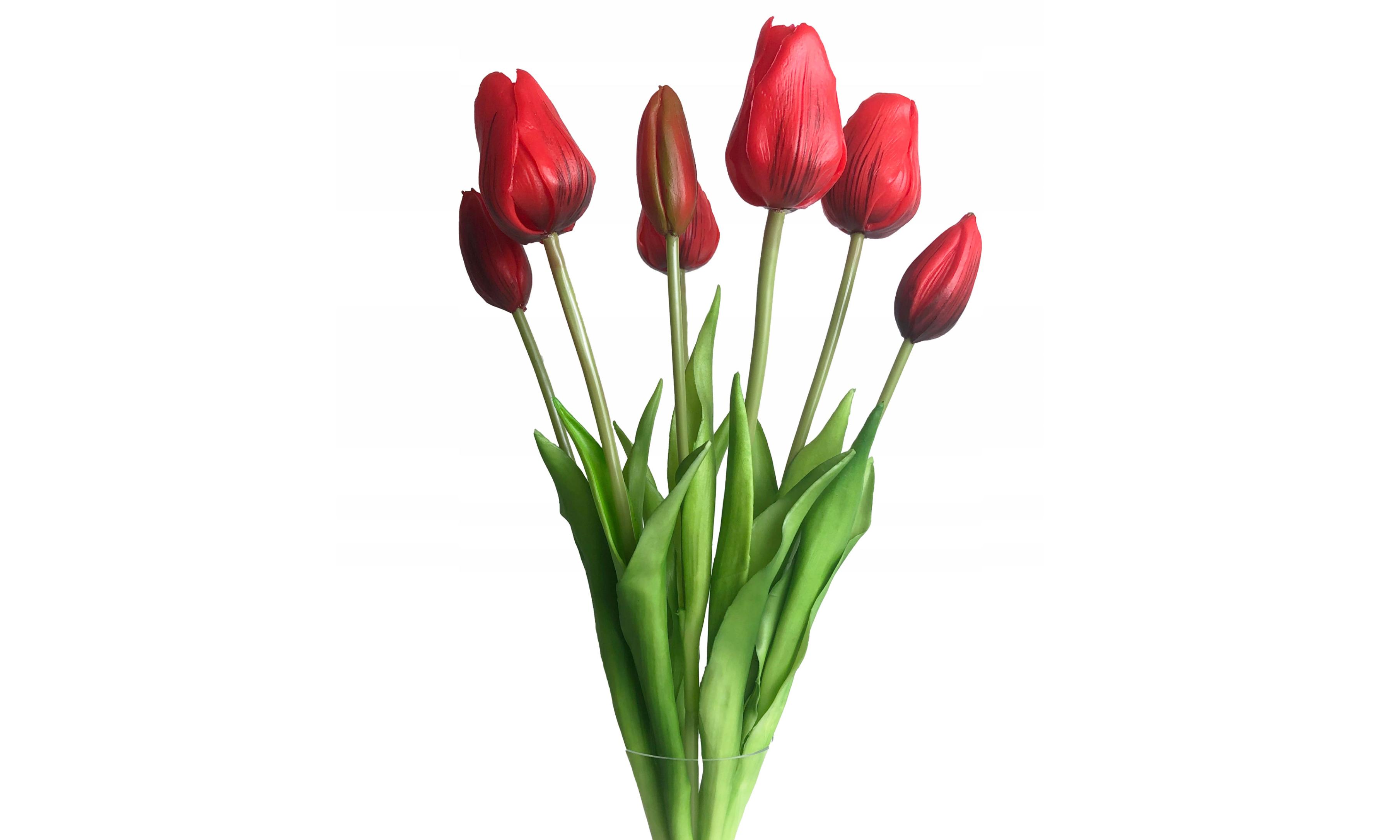 tulip-photo-154
