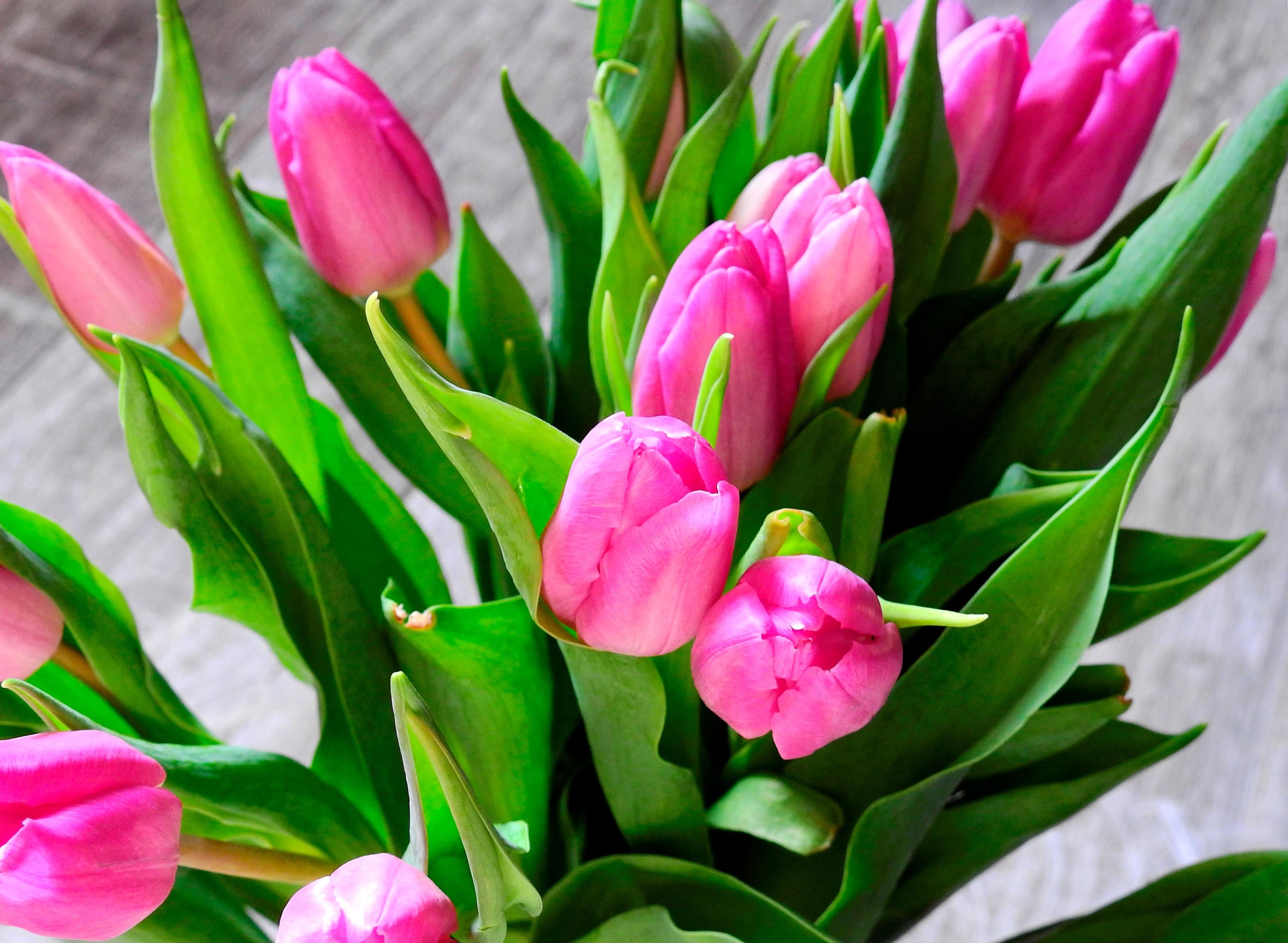tulip-photo-16
