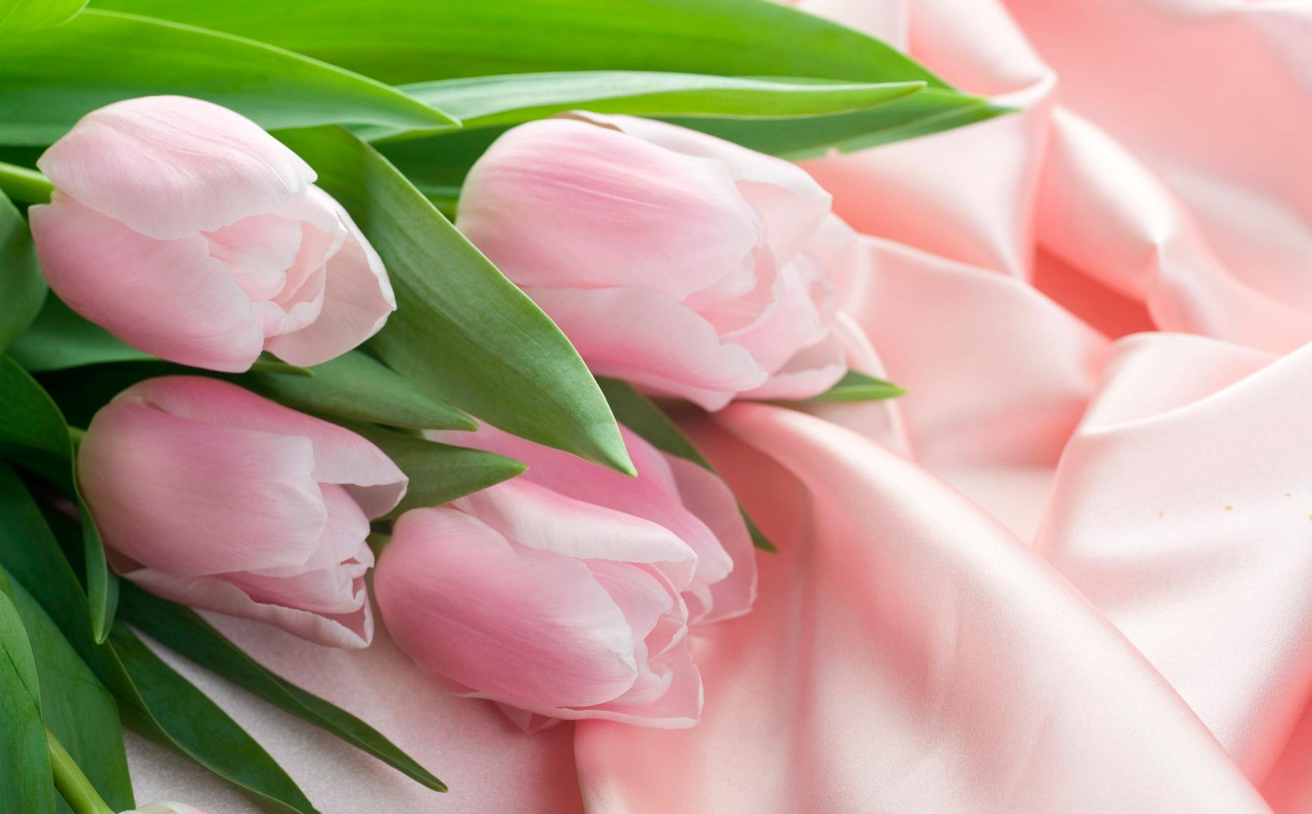 tulip-photo-165