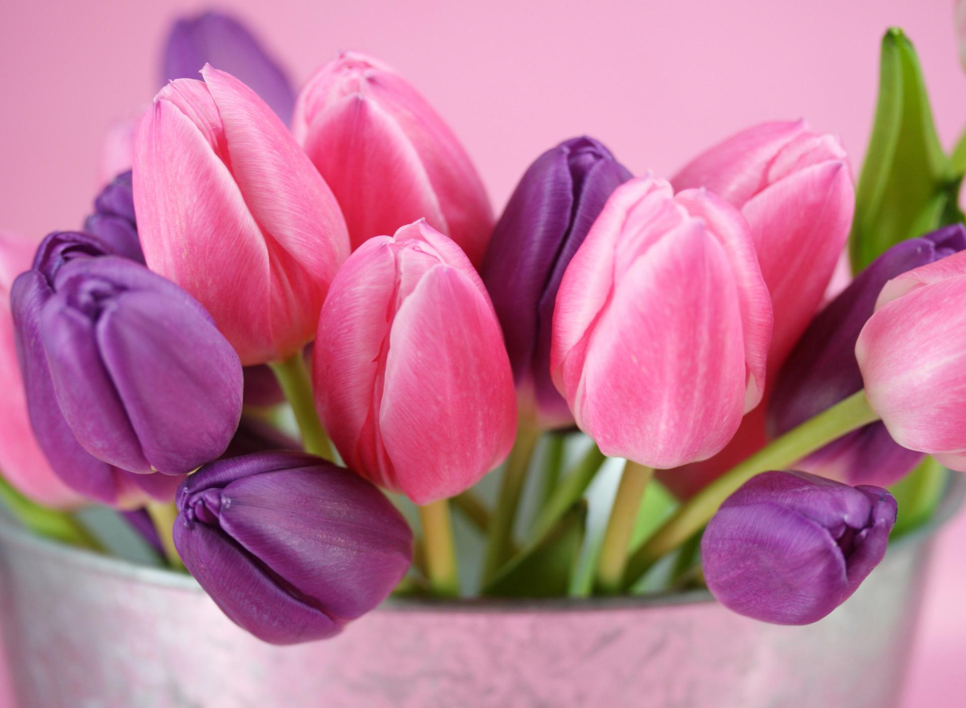 tulip-photo-167