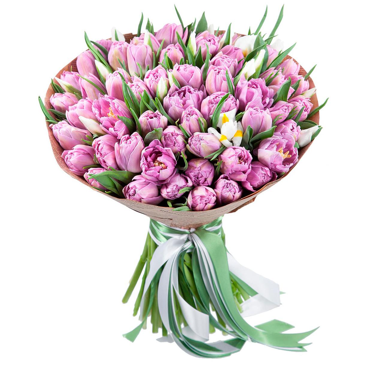tulip-photo-170
