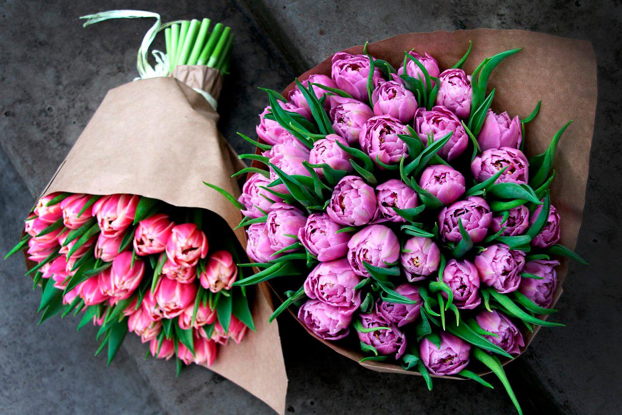tulip-photo-171