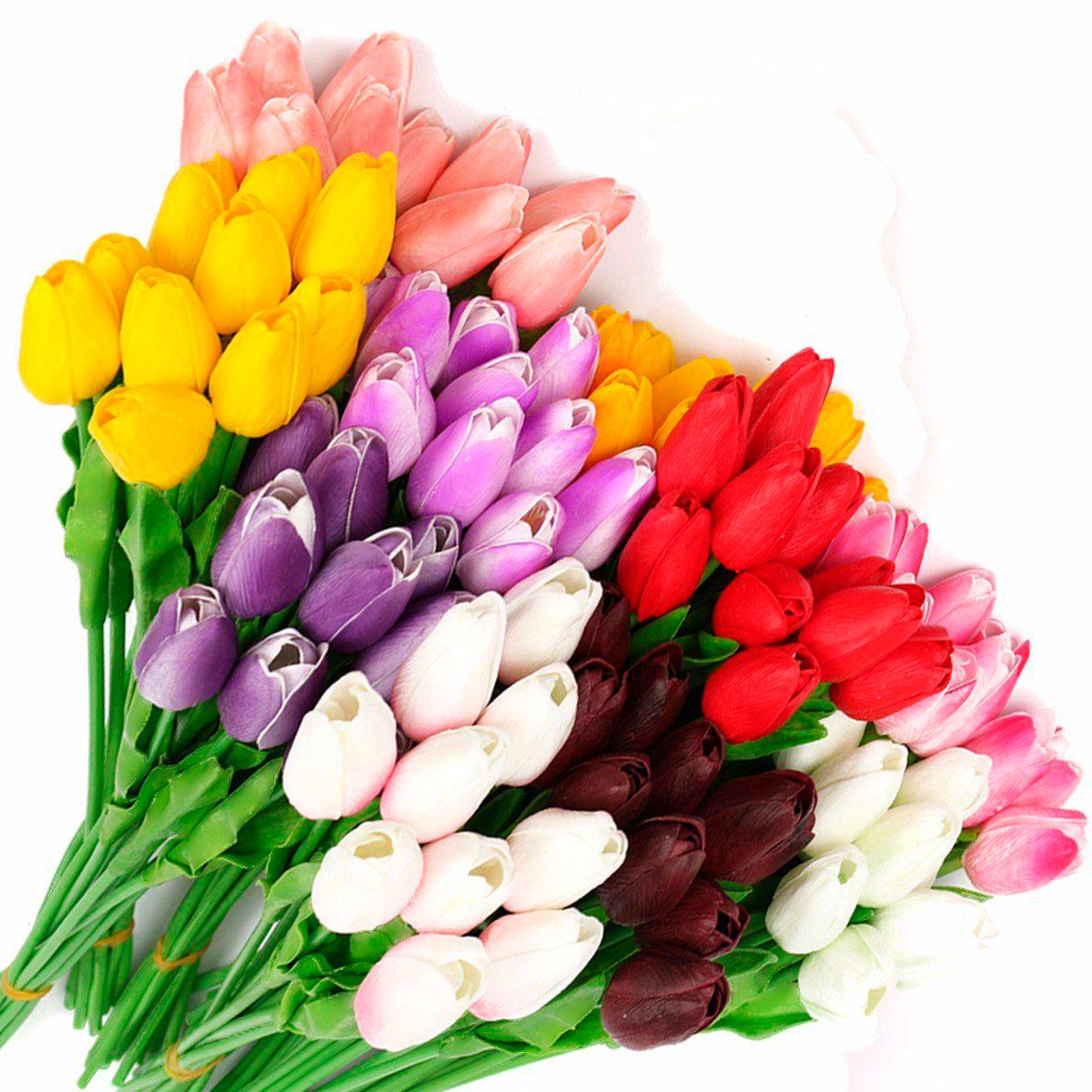 tulip-photo-174