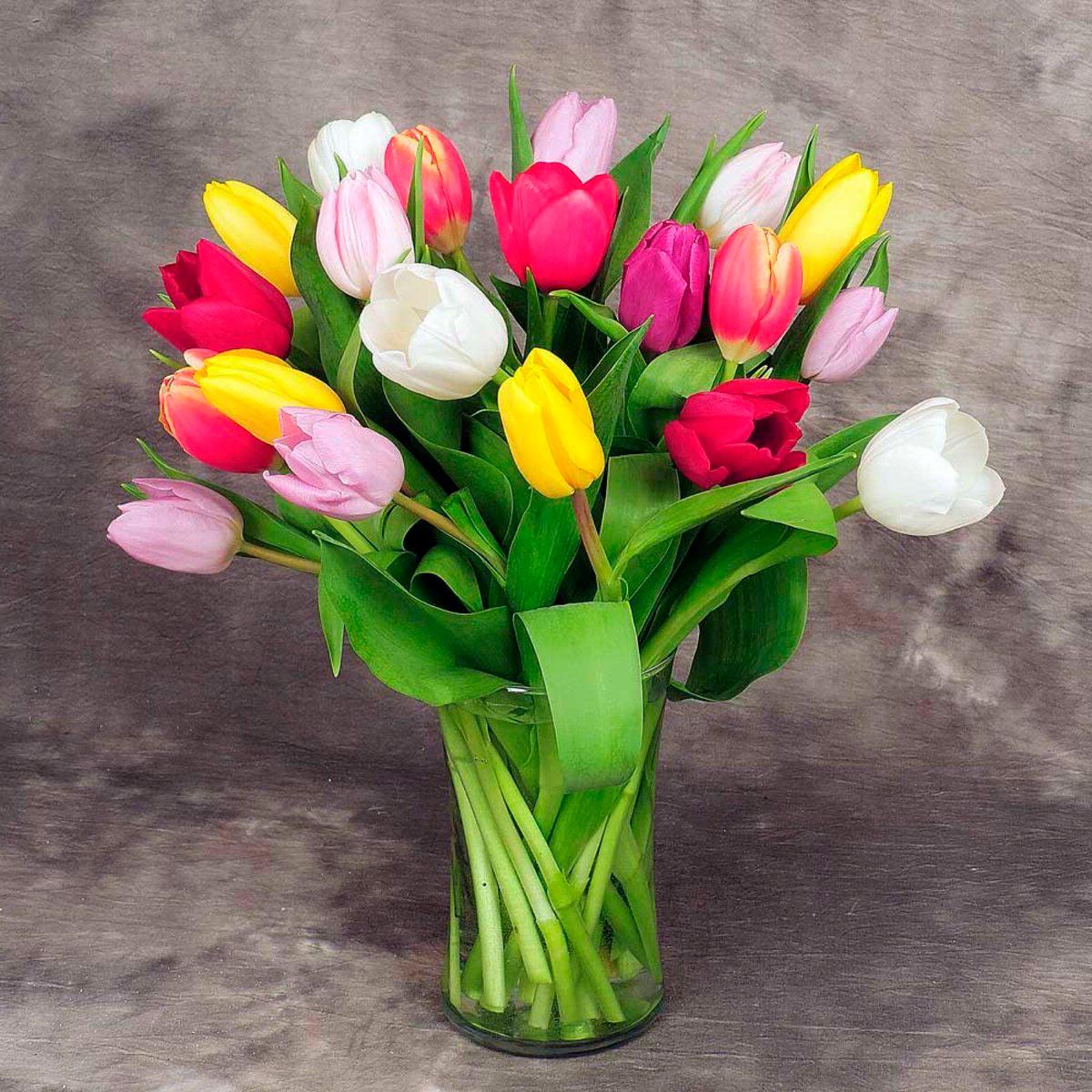 tulip-photo-175