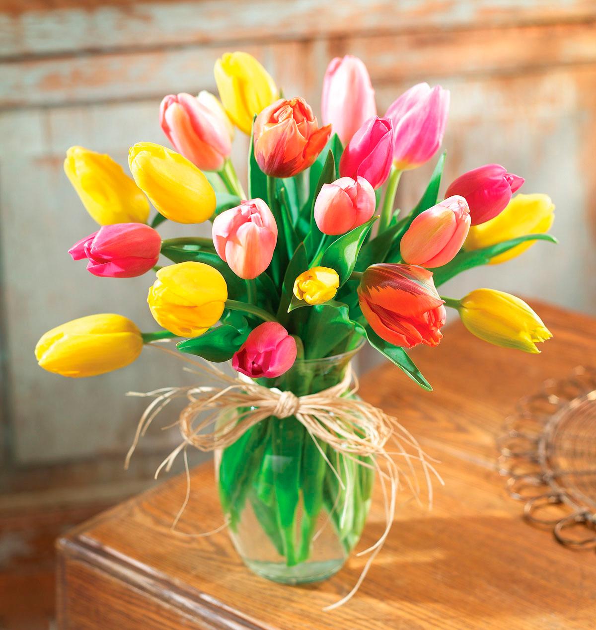 tulip-photo-180