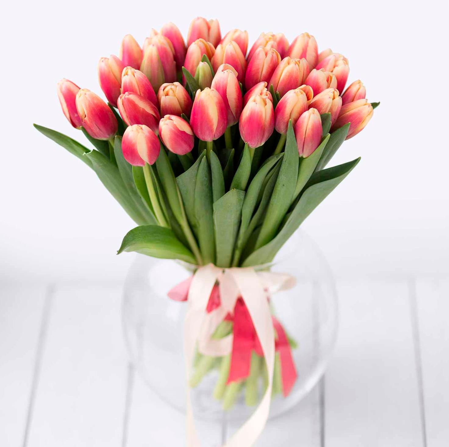 tulip-photo-182