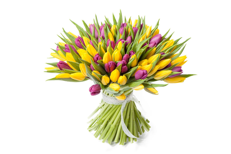 tulip-photo-183