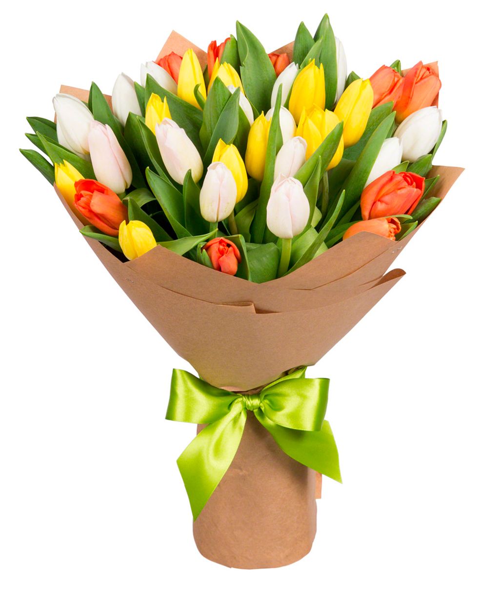 tulip-photo-188