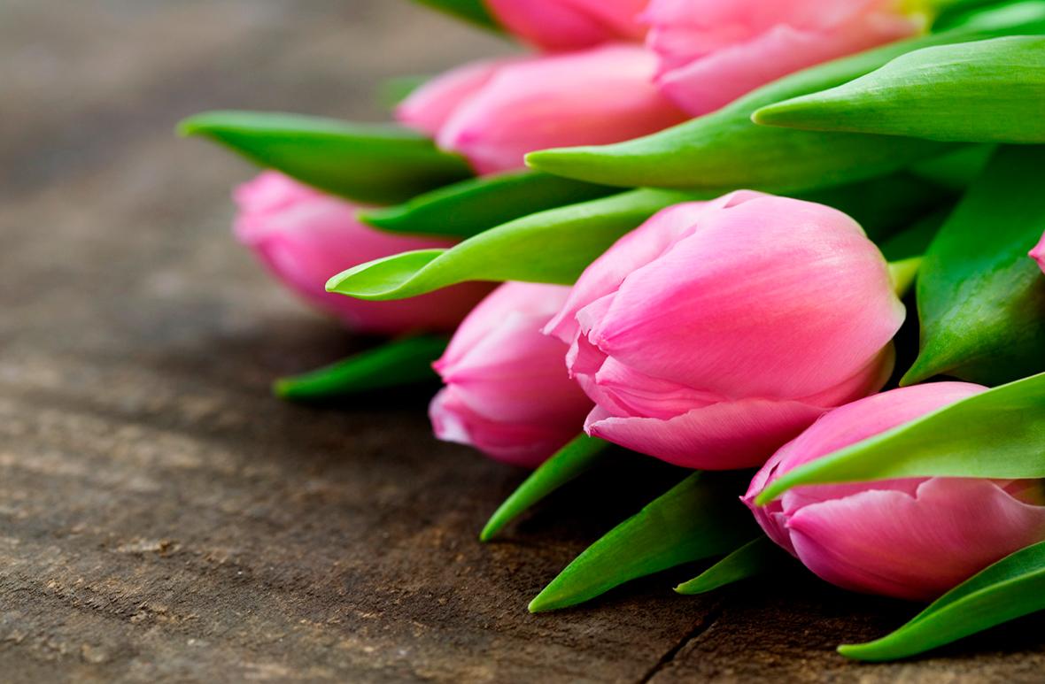 tulip-photo-189