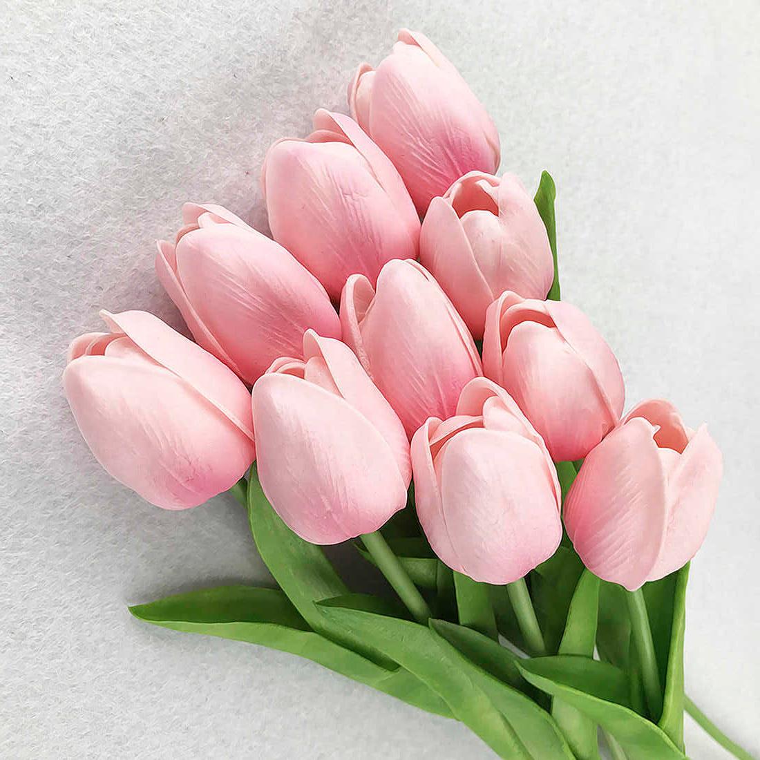 tulip-photo-190