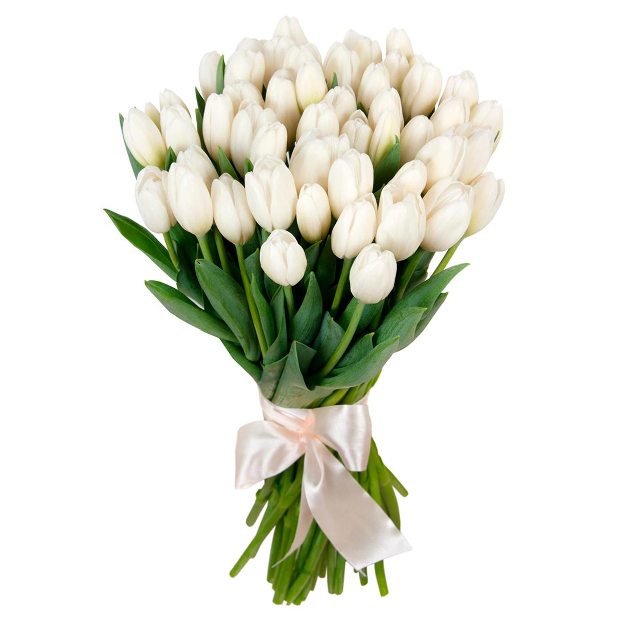 tulip-photo-193