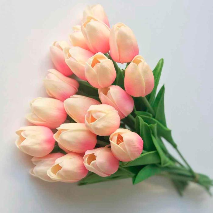 Fotografie krásných tulipánů