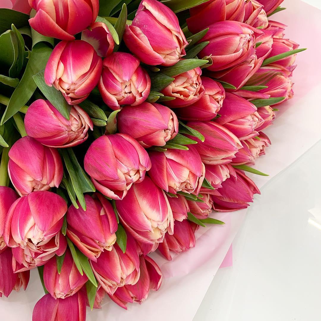 tulip-photo-199