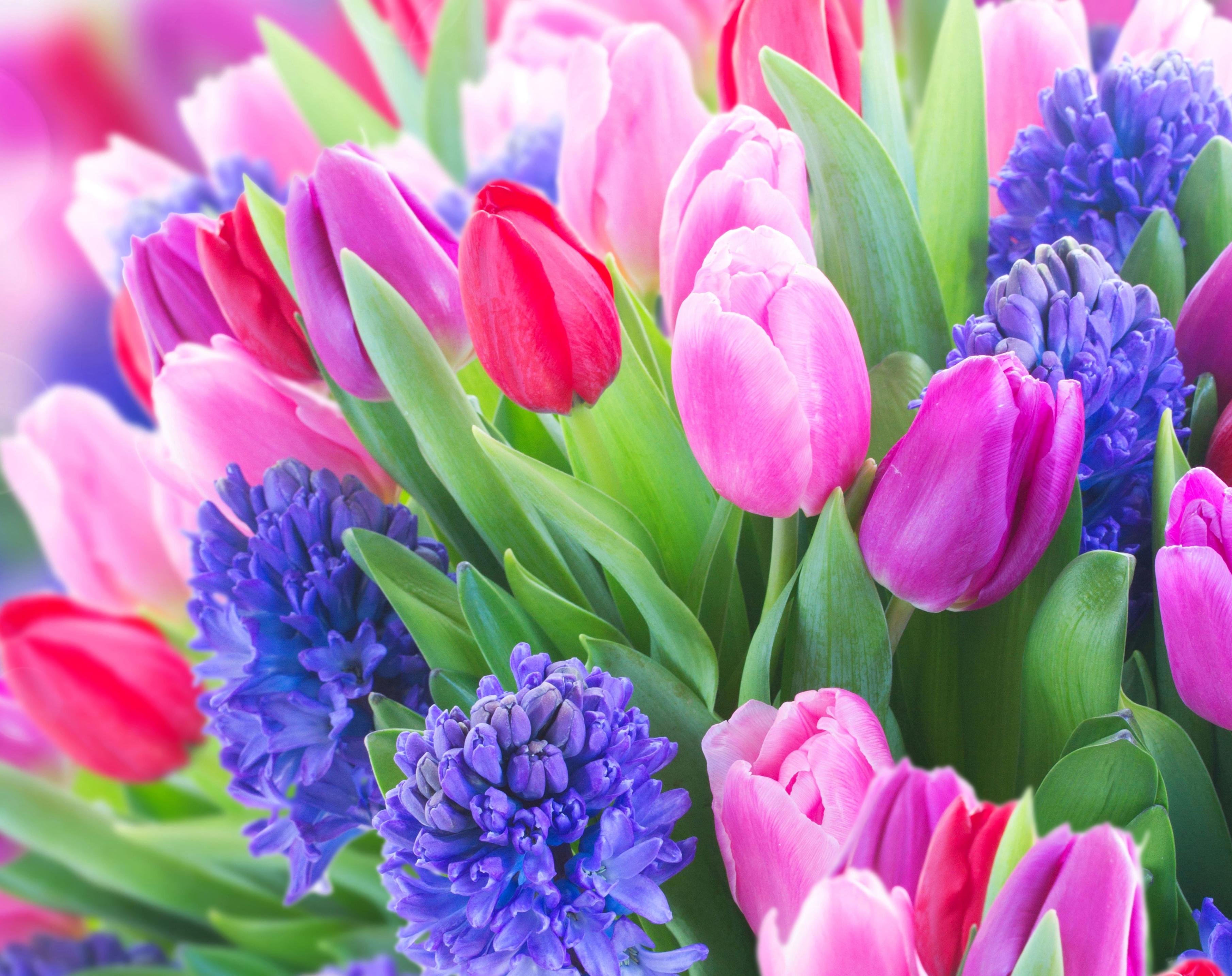 tulip-photo-2
