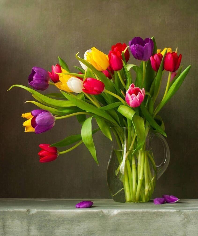 tulip-photo-201