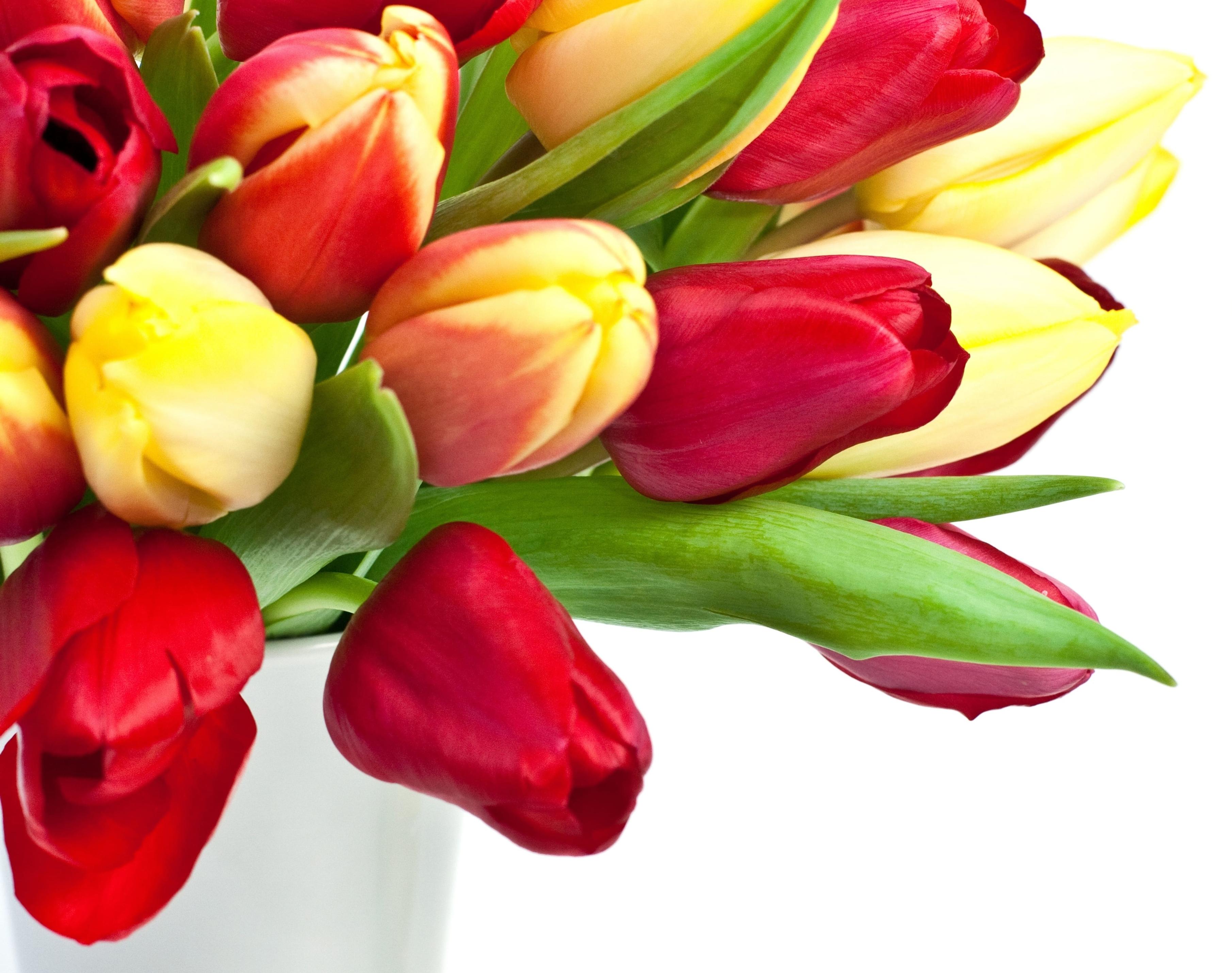 tulip-photo-22