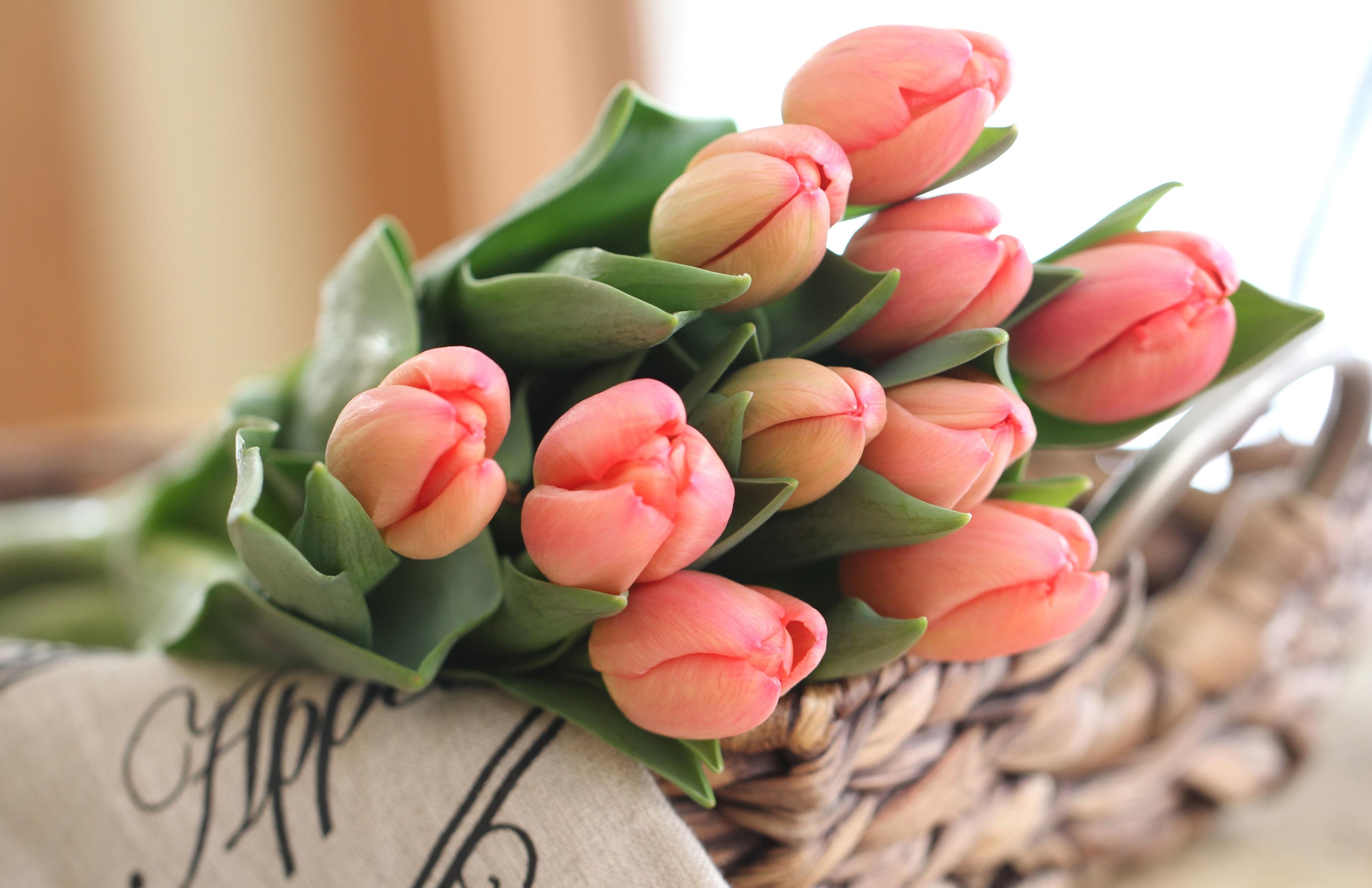 tulip-photo-26