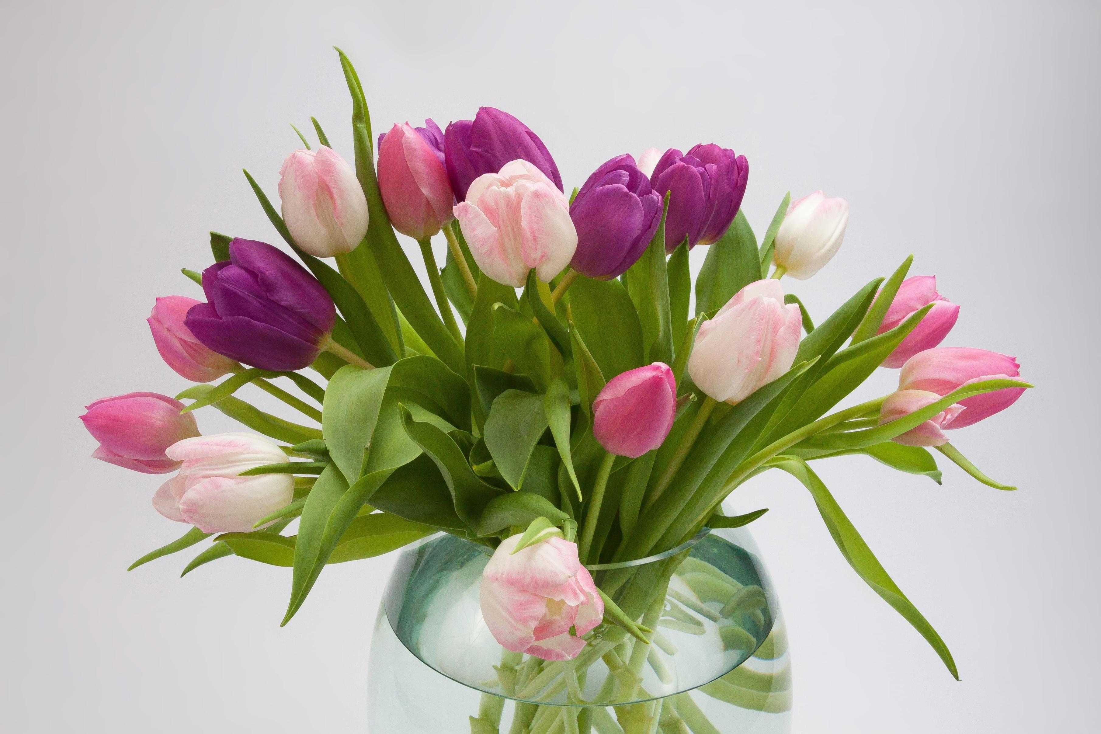tulip-photo-27