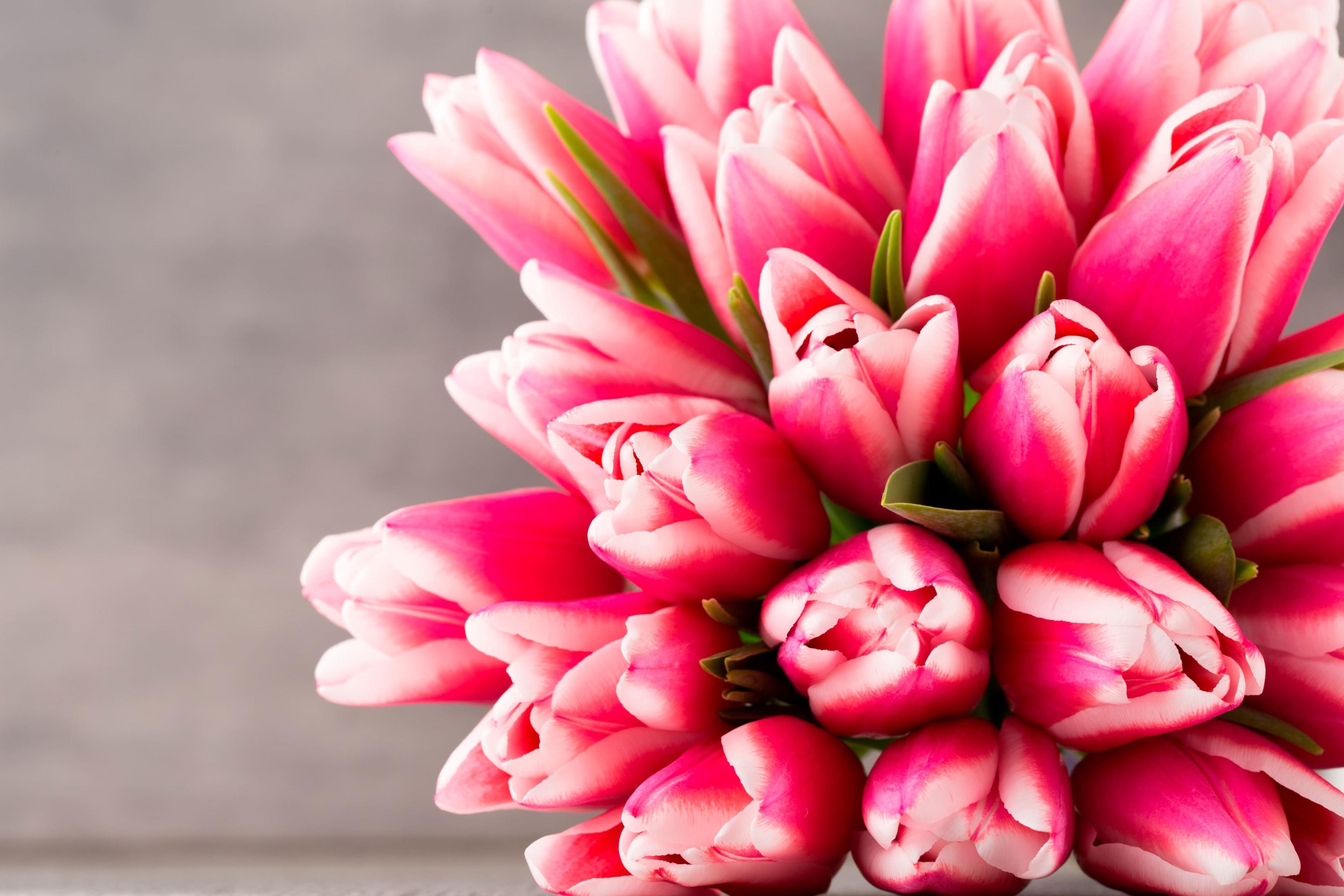 tulip-photo-30