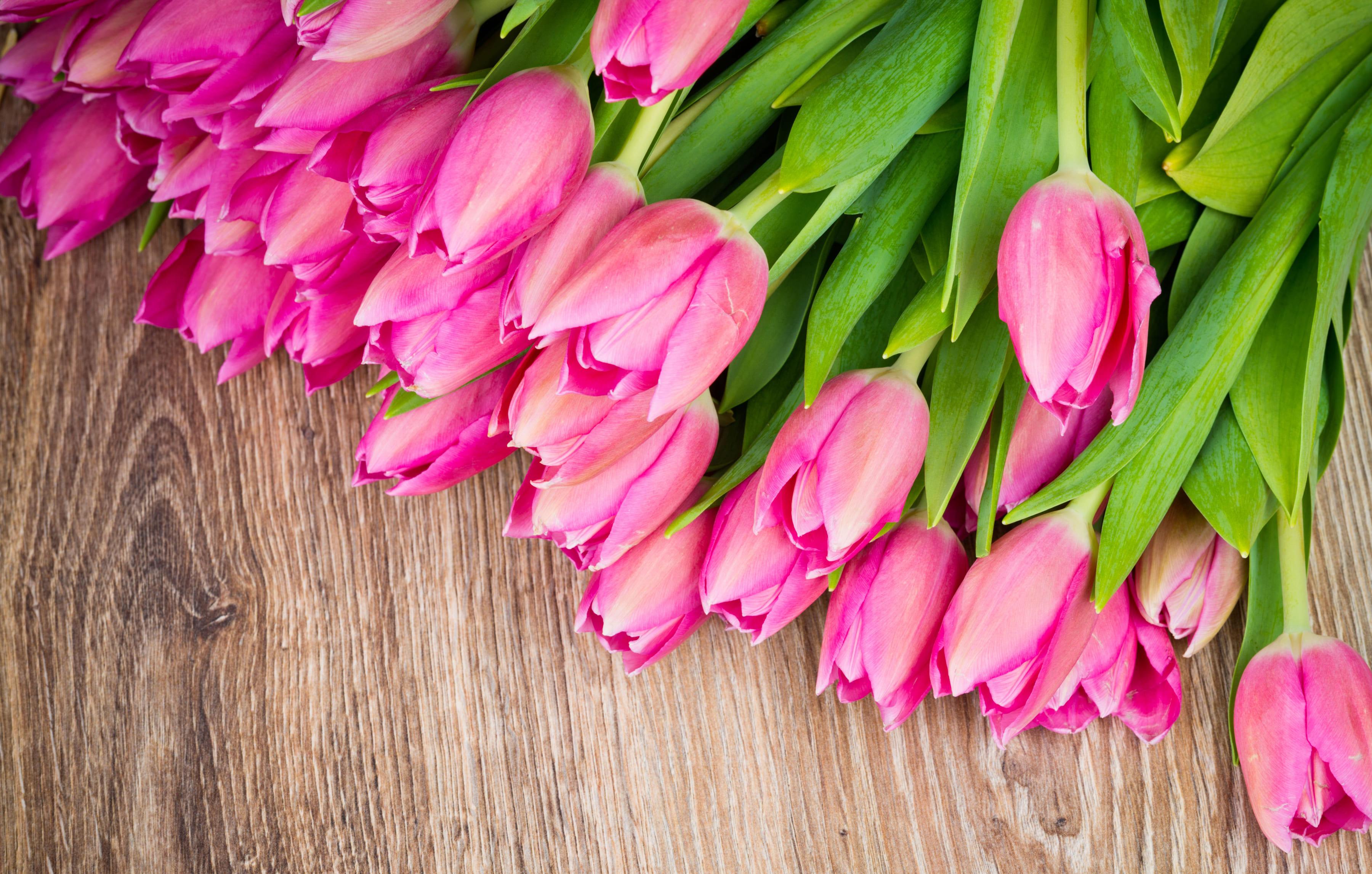 tulip-photo-39