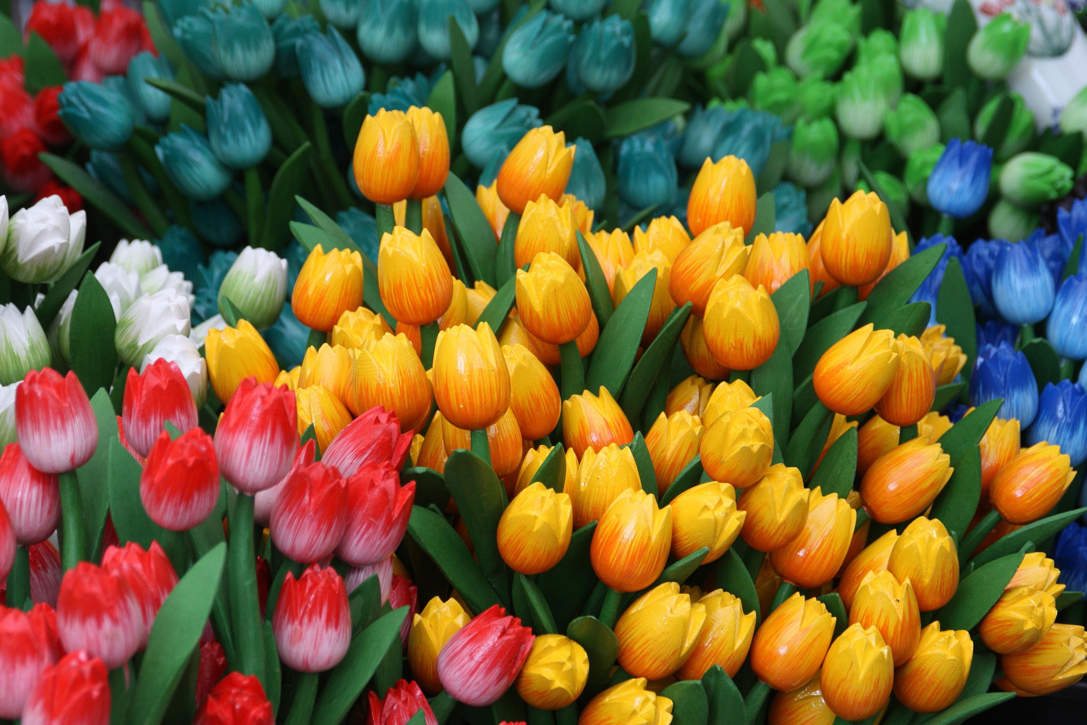 tulip-photo-43