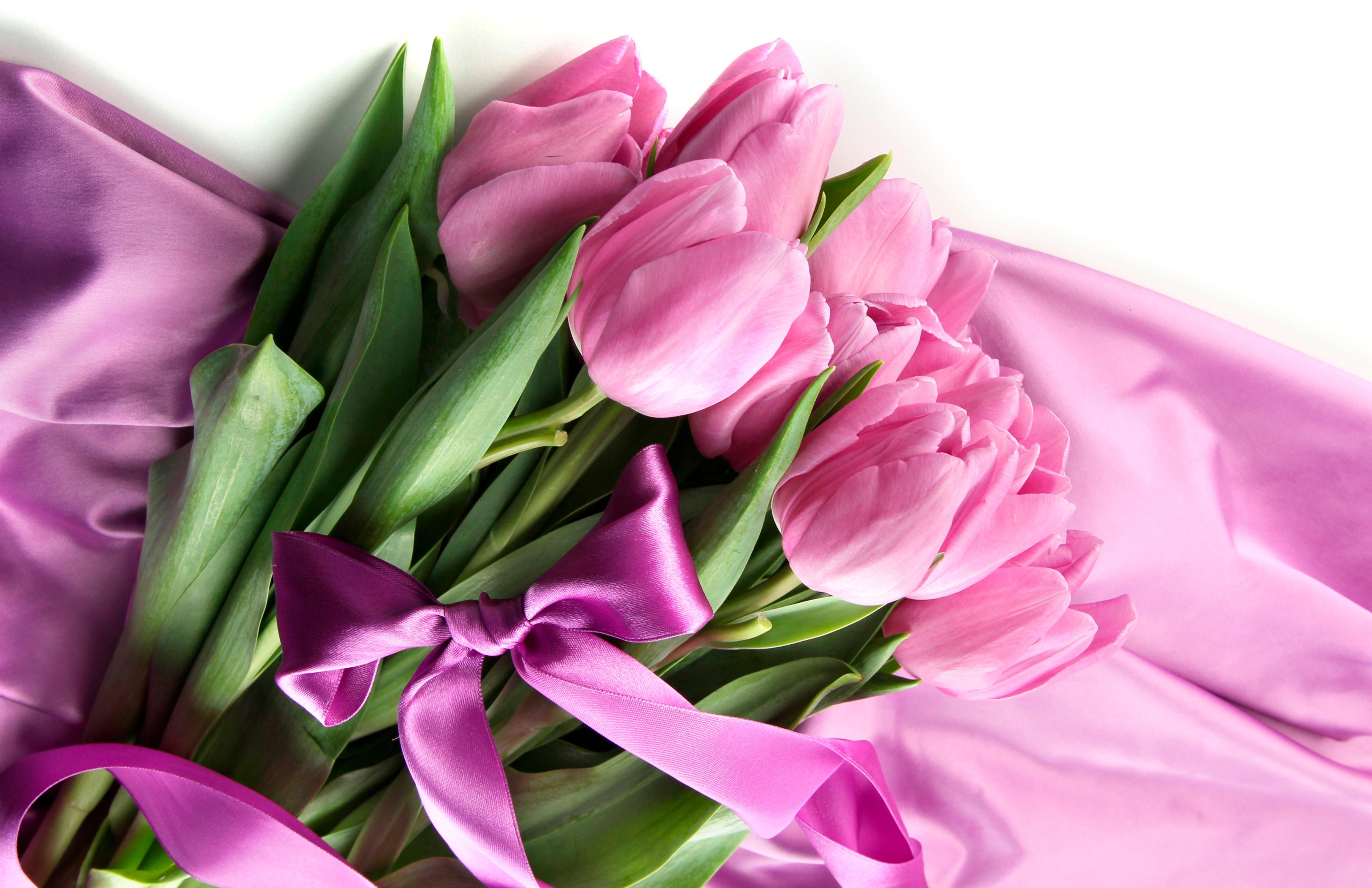 tulip-photo-45