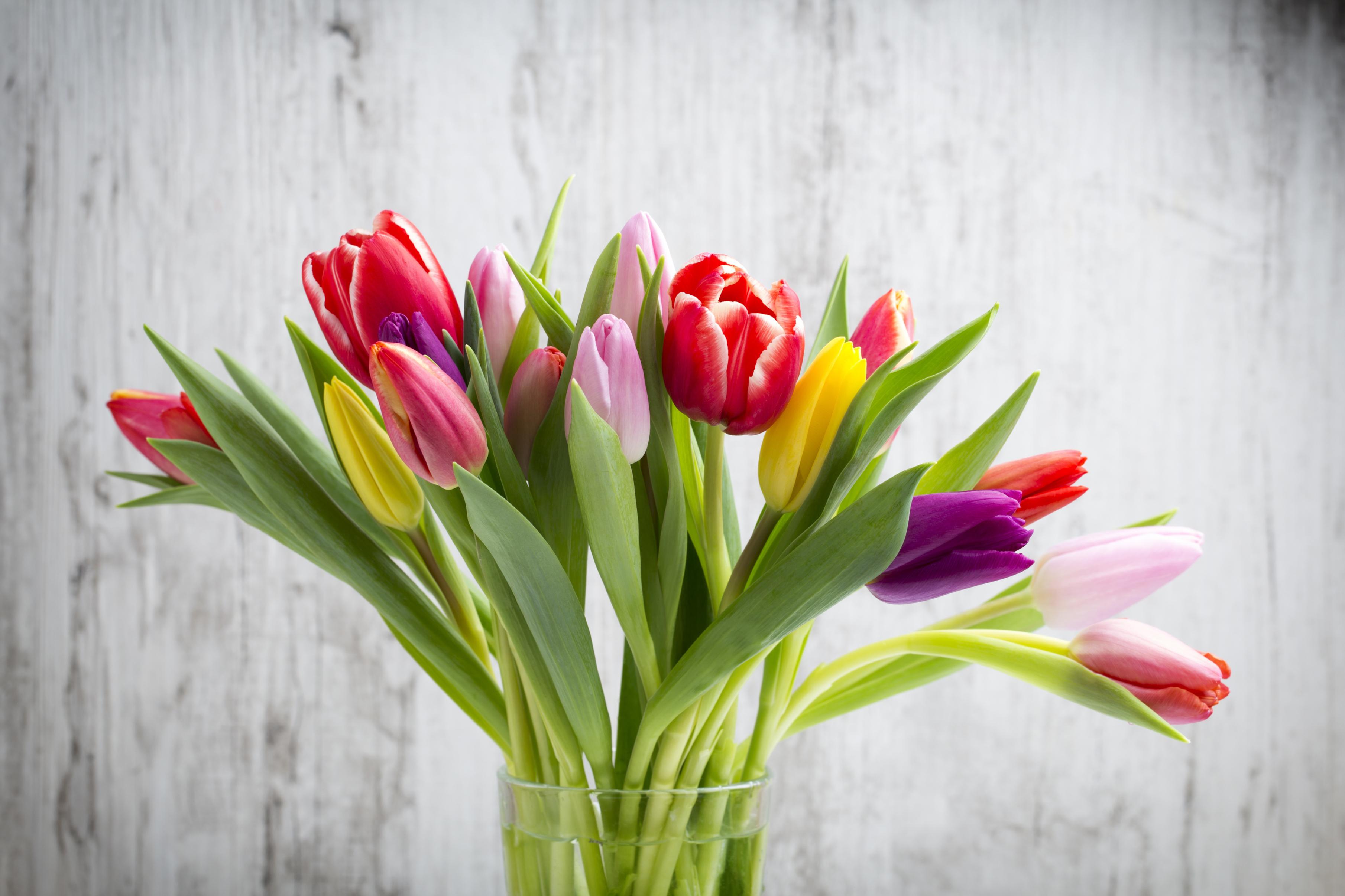 tulip-photo-47