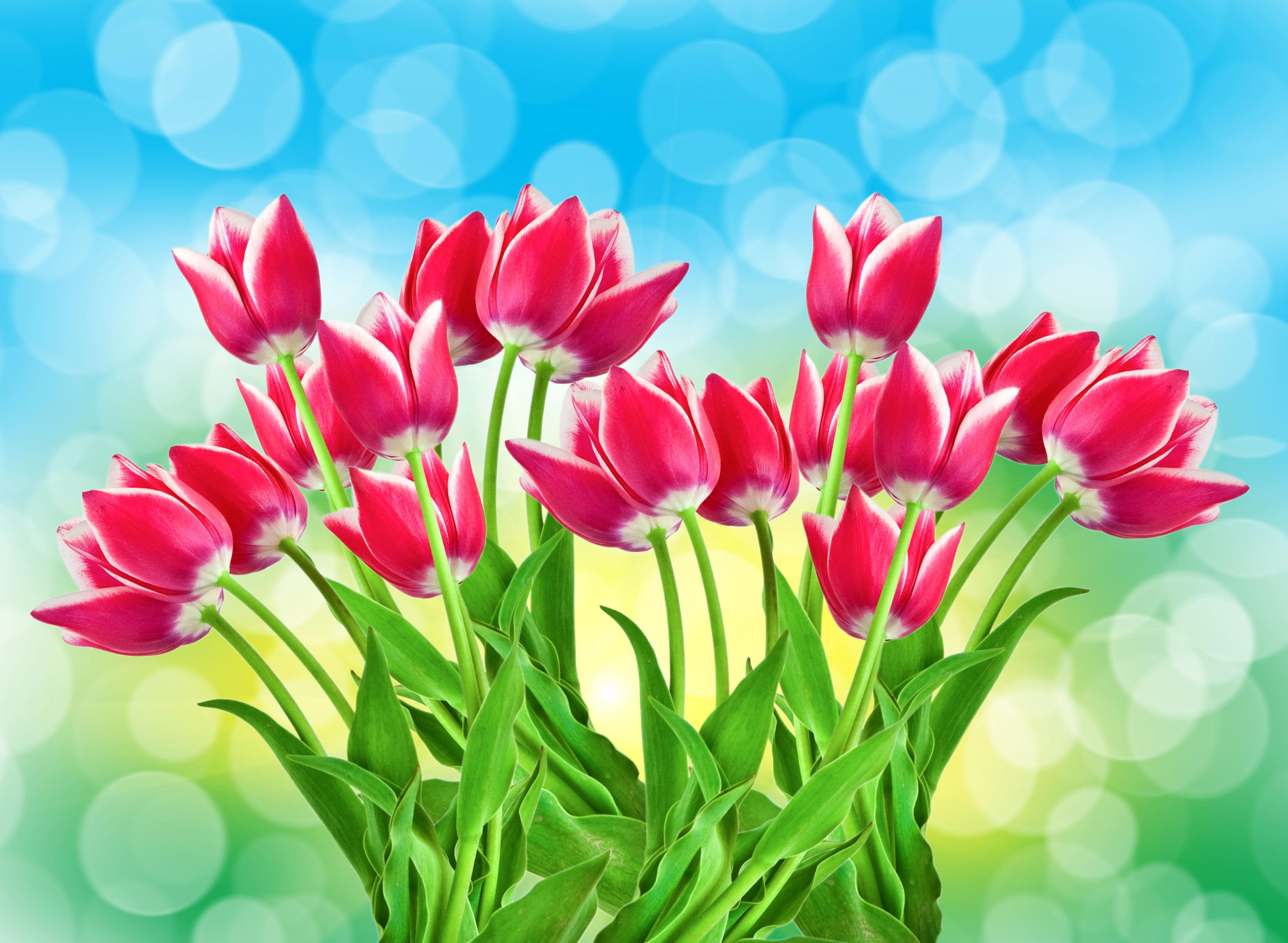 tulip-photo-5