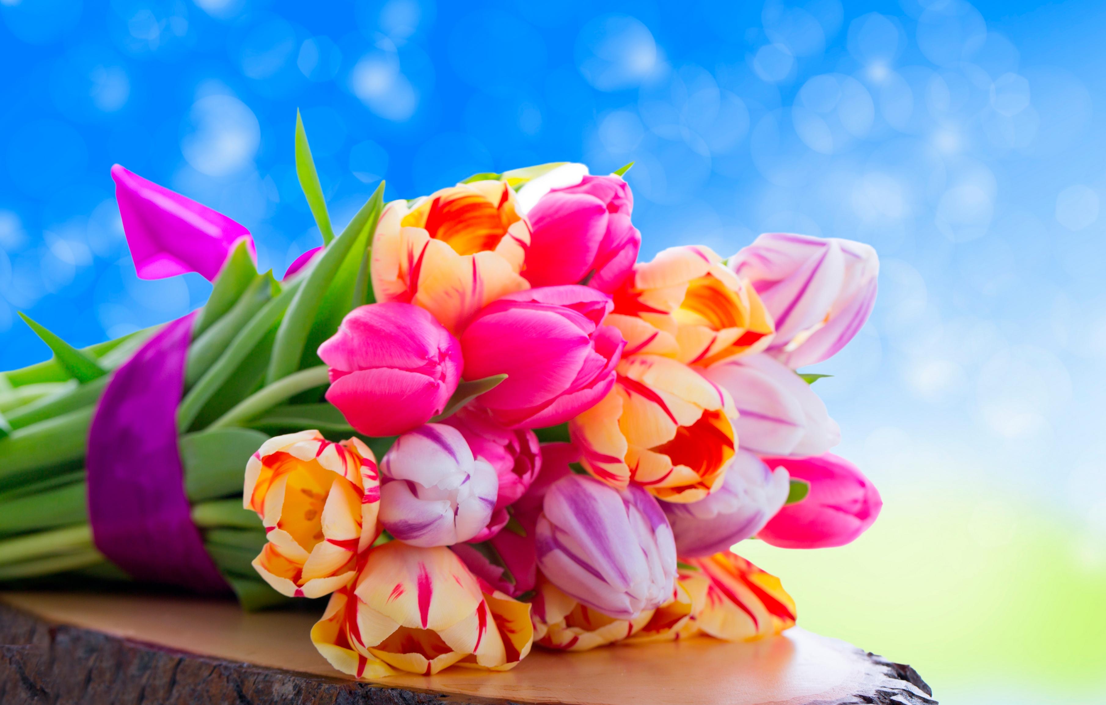 tulip-photo-51
