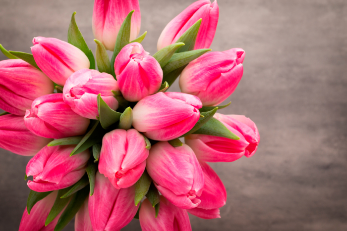 Photos of Beautiful Tulips - Top 200 Free Images of This Flowers