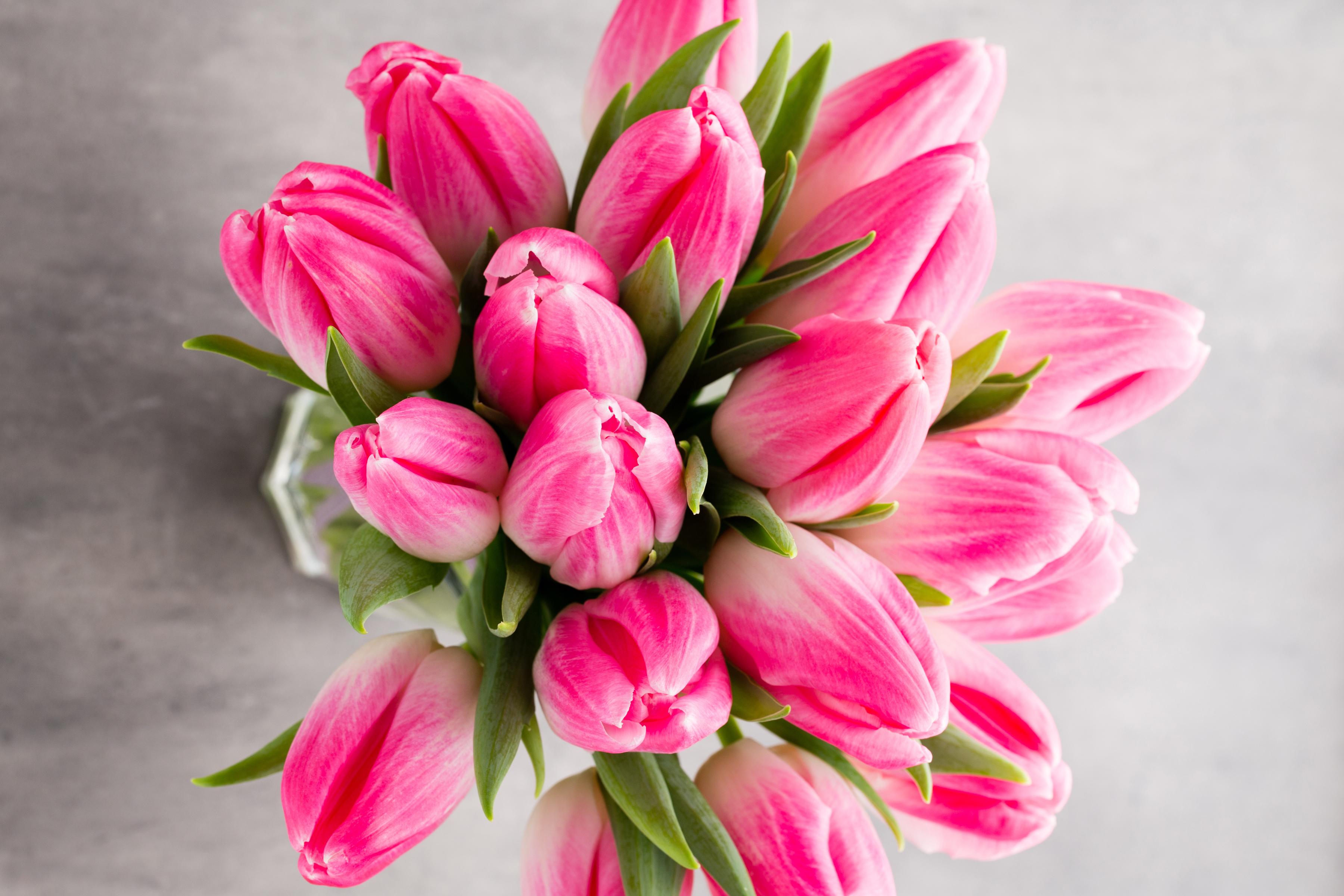 tulip-photo-62