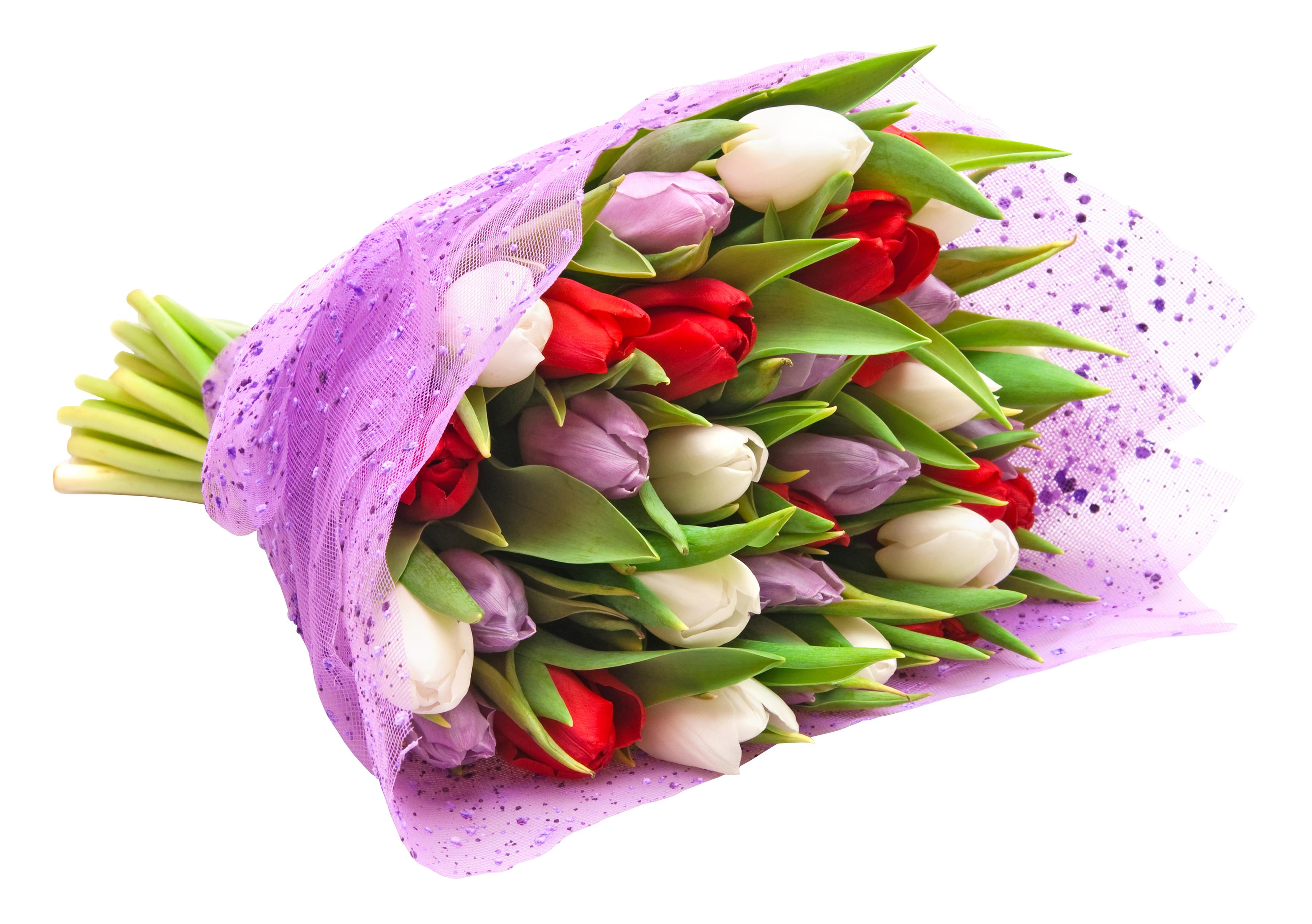 tulip-photo-69