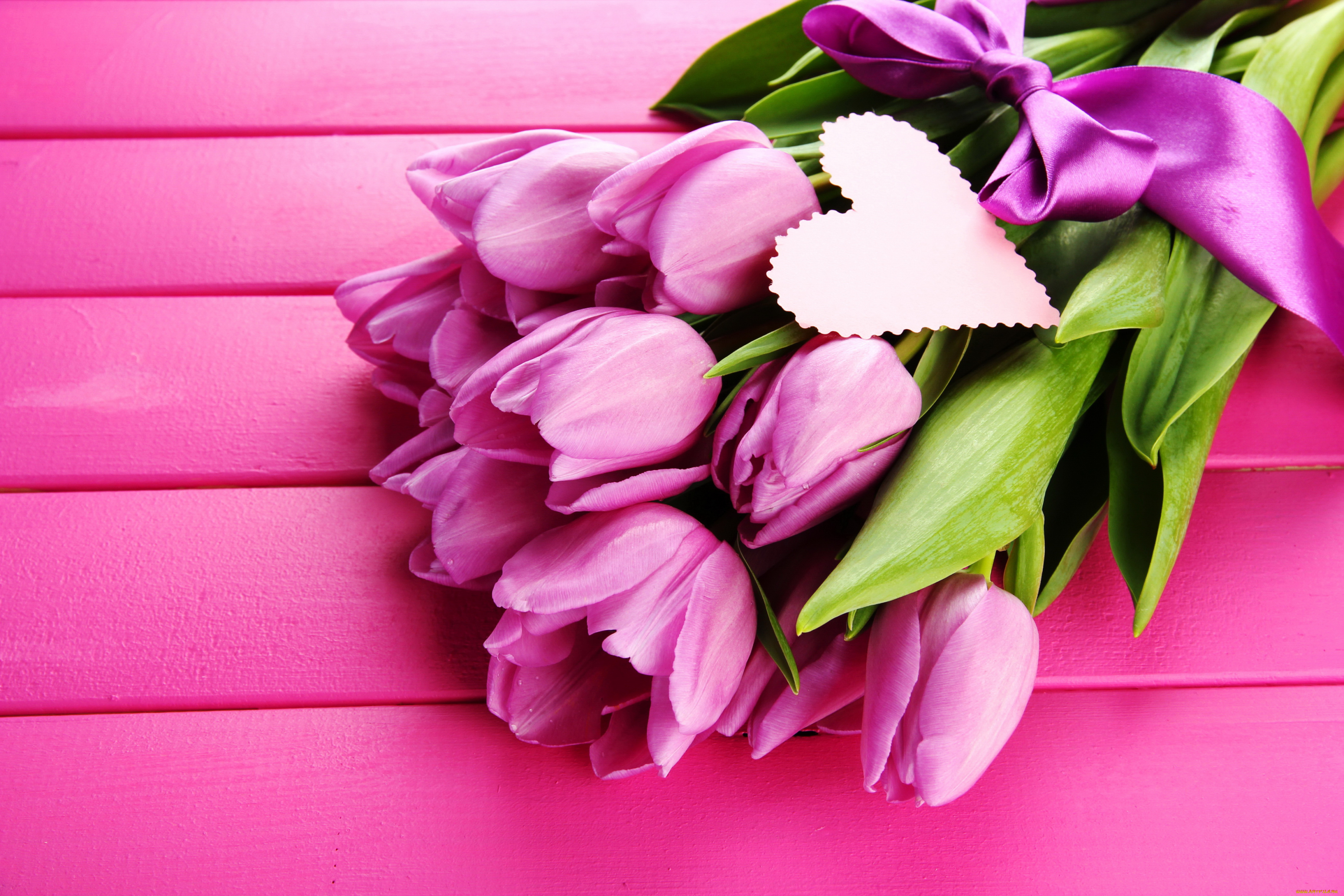tulip-photo-72
