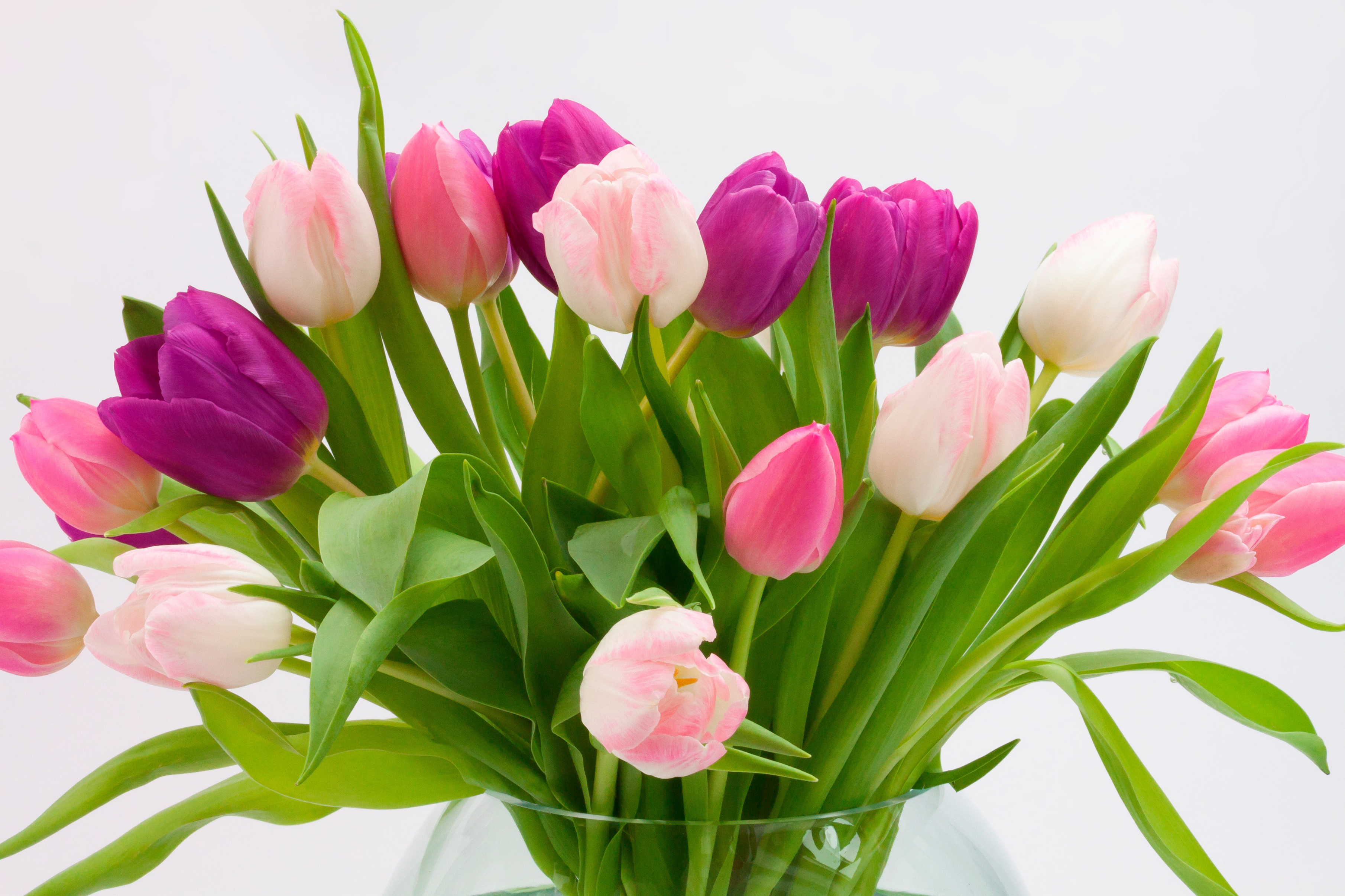 tulip-photo-9
