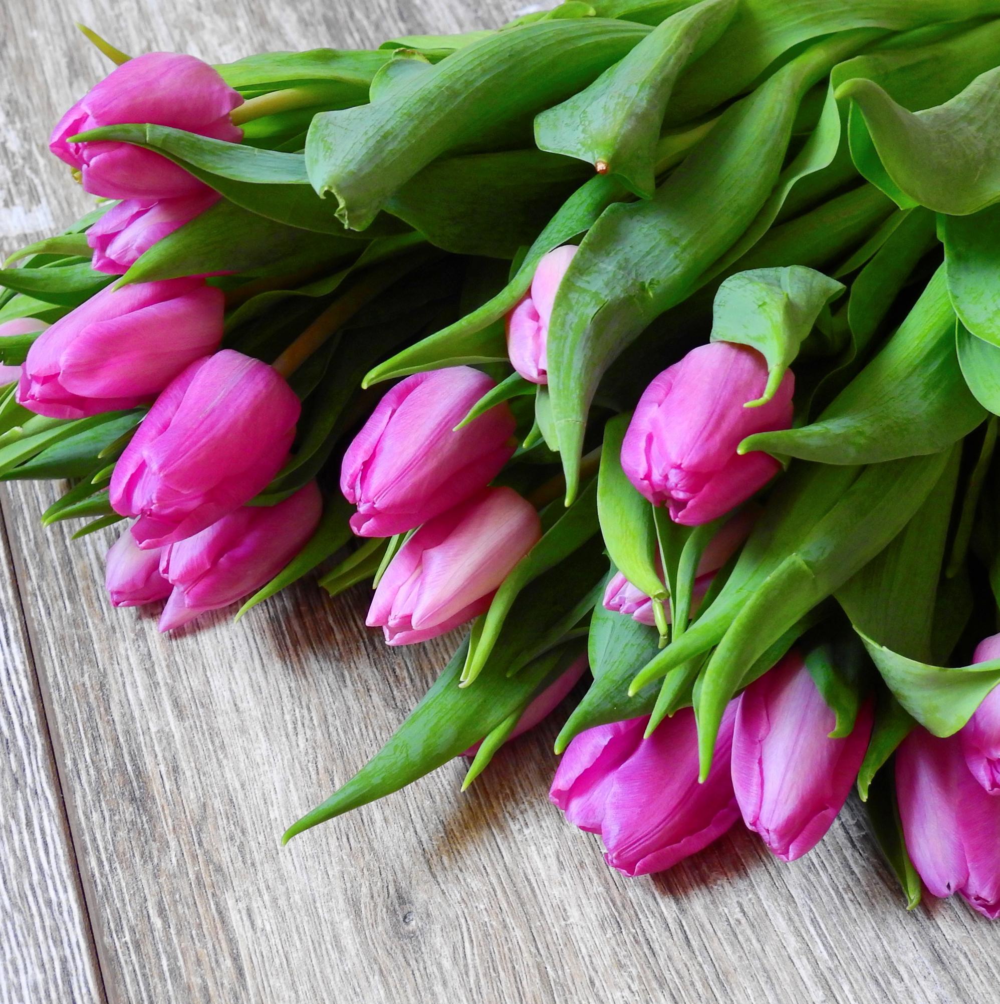 tulip-photo-91