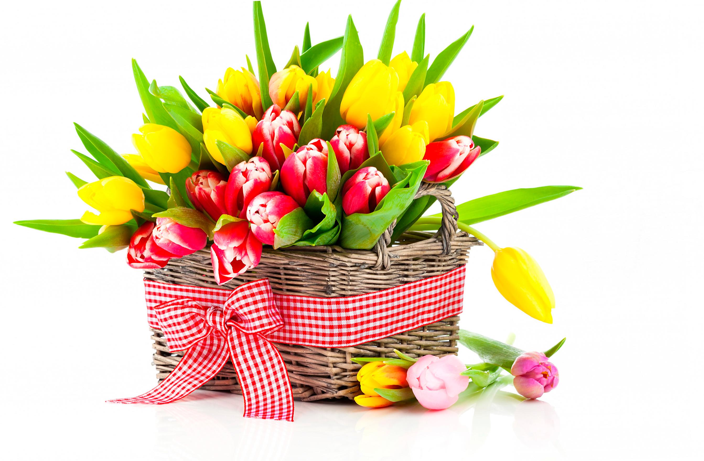 tulip-photo-93
