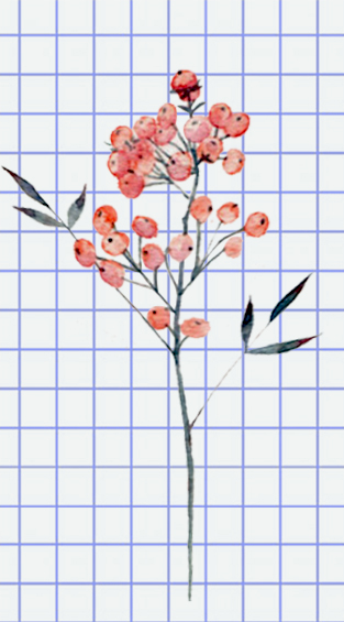 flowers-drawing-image-10