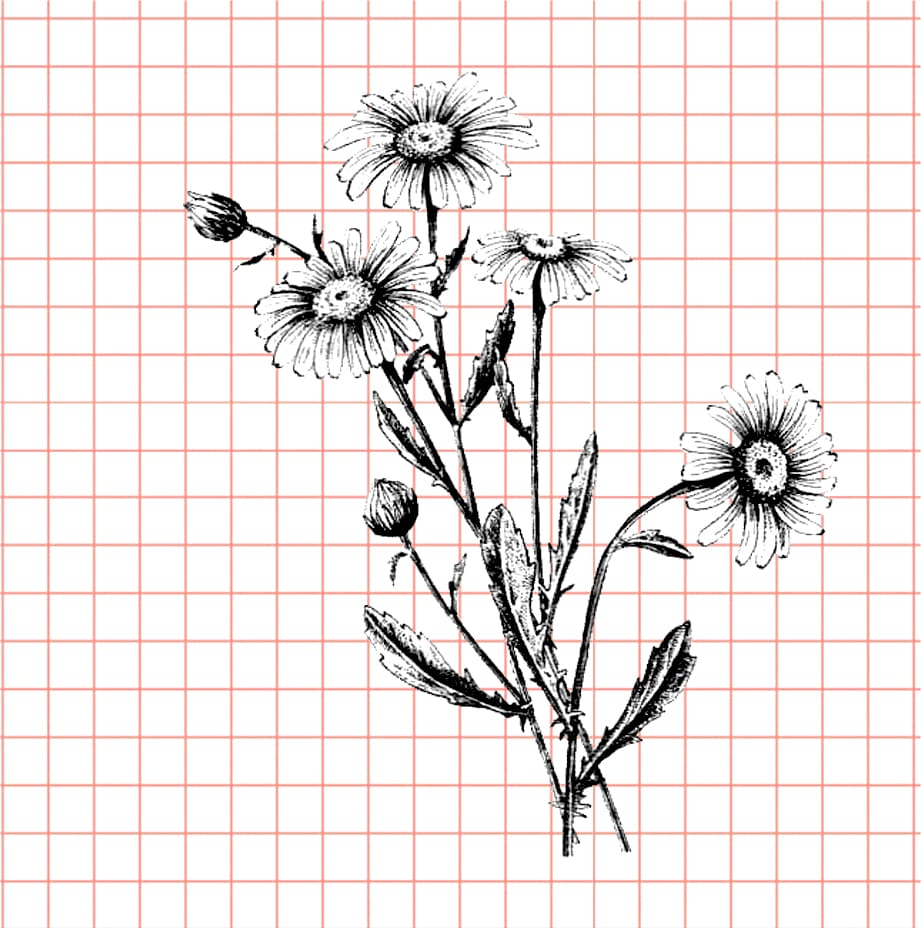 flowers-drawing-image-108